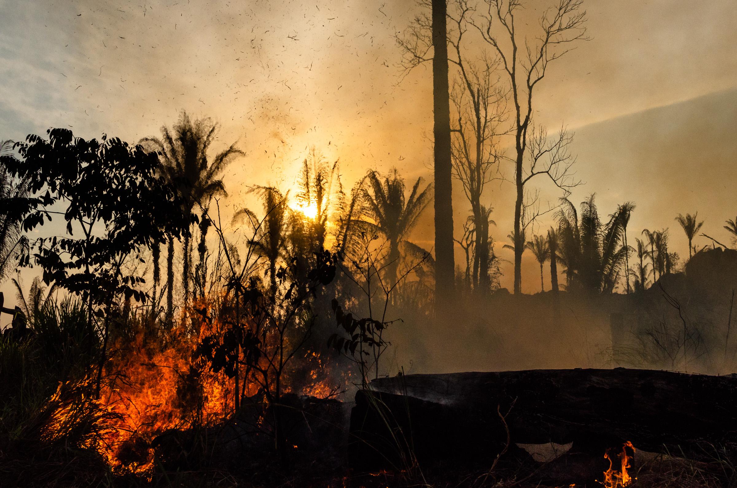 A természet pusztításában kódolva volt egy veszedelmes világjárvány