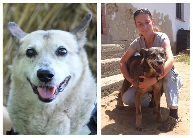 Kiderült, hogyan élhetett meg 22 és 27 éves kort két magyar kutya