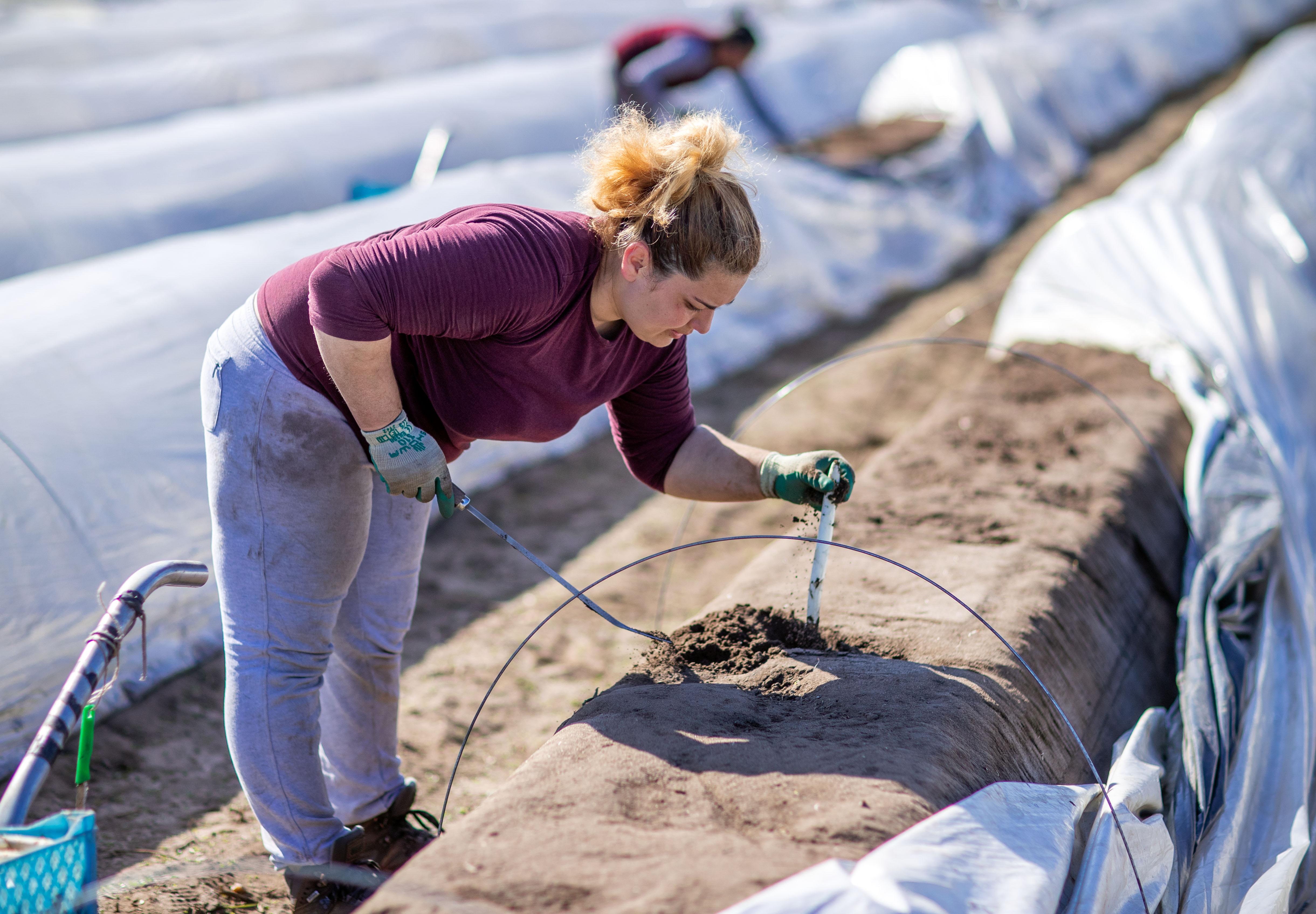 Csokinyúllal és minimálbérrel várja Nyugat-Európa a kiszolgáltatott kelet-európai vendégmunkásokat