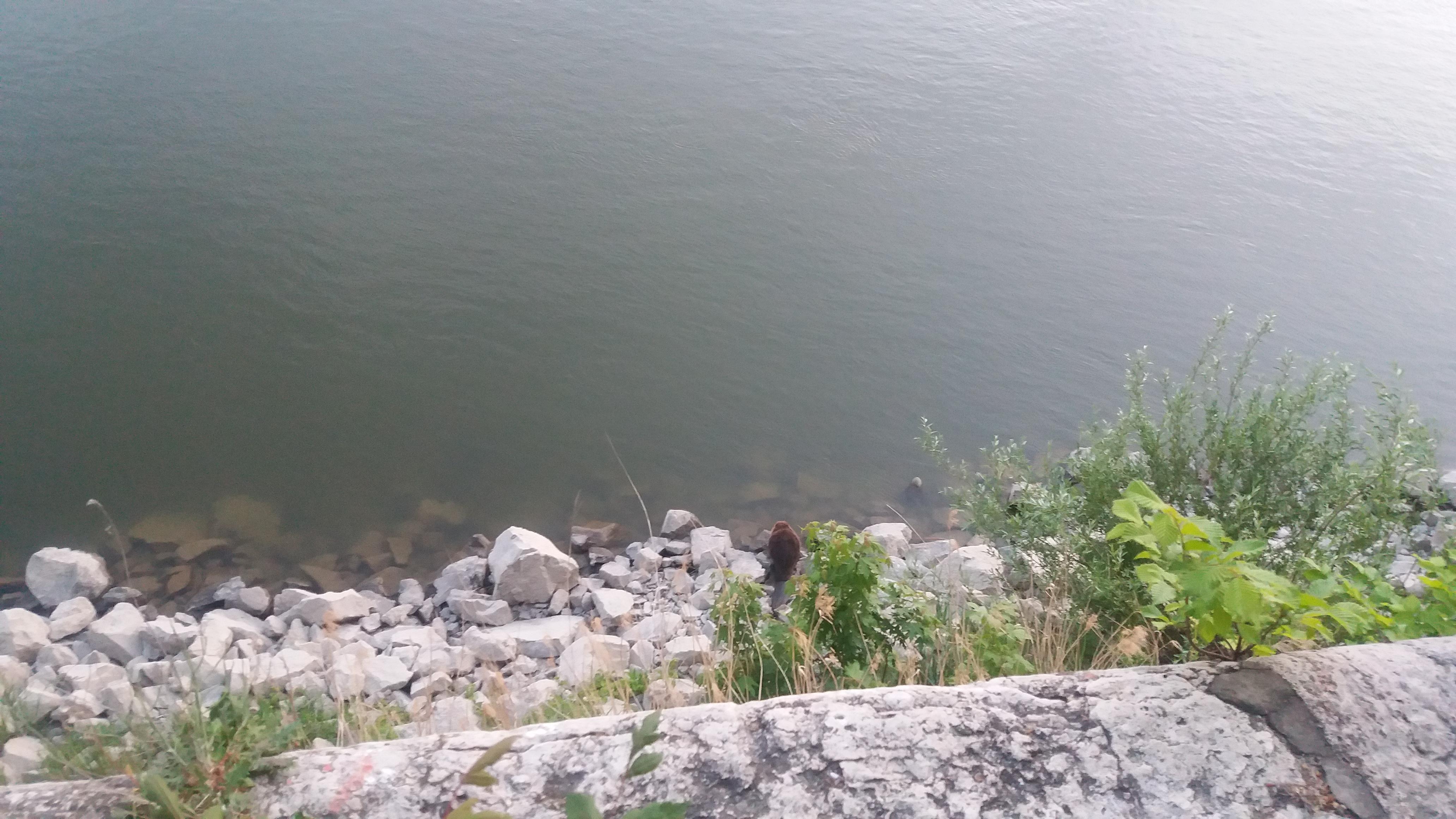 Ez a hód kihasználta, hogy most nem áll szállodahajó a pesti Duna-parton