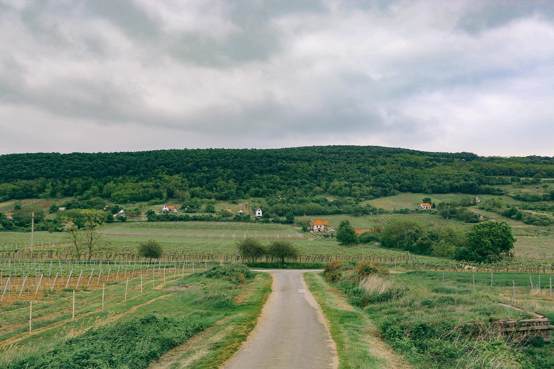 Elutasította a földhivatal a tulajdonosok tudta nélkül beadott Balaton-felvidéki haszonbérleti szerződéseket