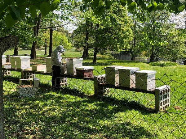 Méhbaráttá alakítják a parkokat Ljubljanában