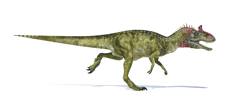 Egy megaraptor lehetett az egyik utolsó húsevő dinófaj a bolygón