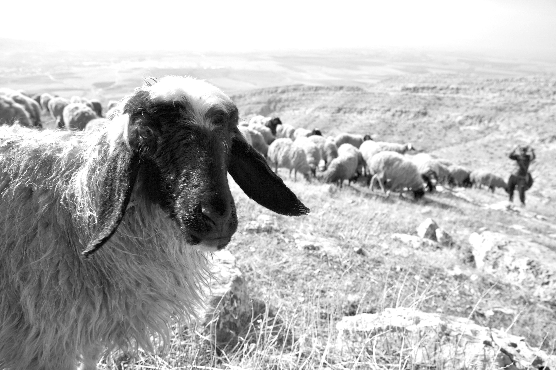 Pásztorok apokalipszis után