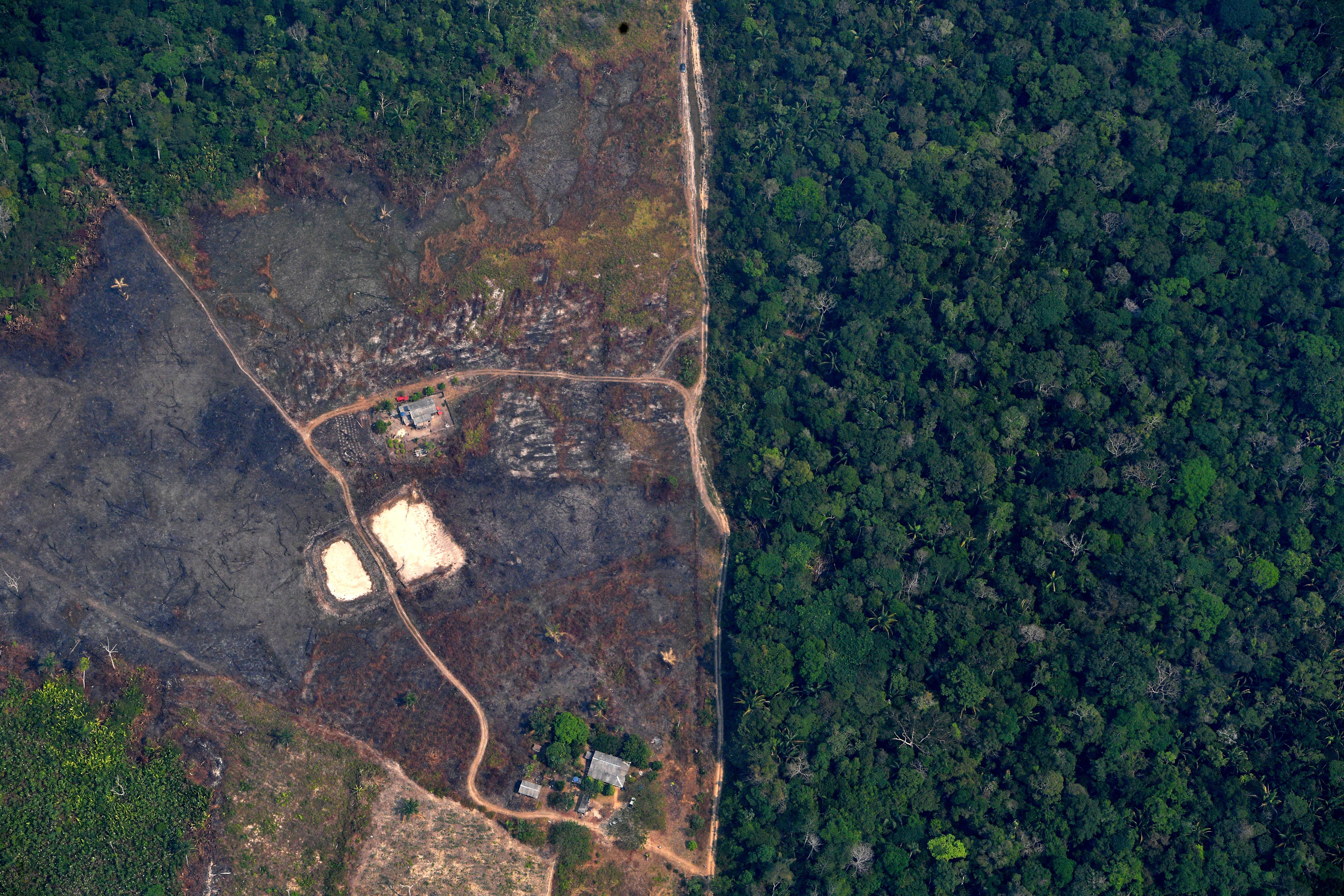 Tavaly minden hatodik másodpercben elpusztult egy focipályányi esőerdő