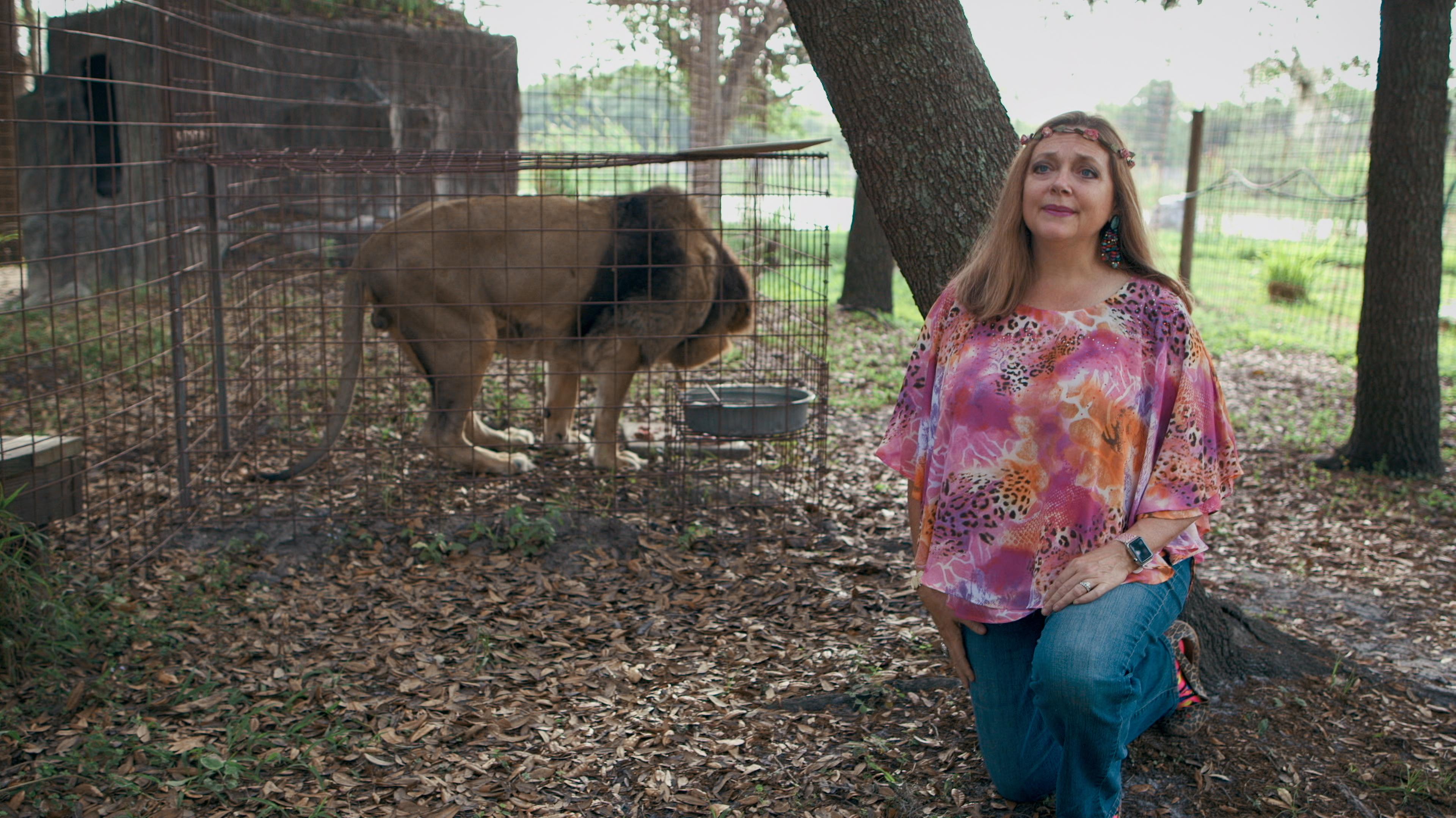 Carole Baskin állatparkjában tigris támadt egy 69 éves önkéntesre