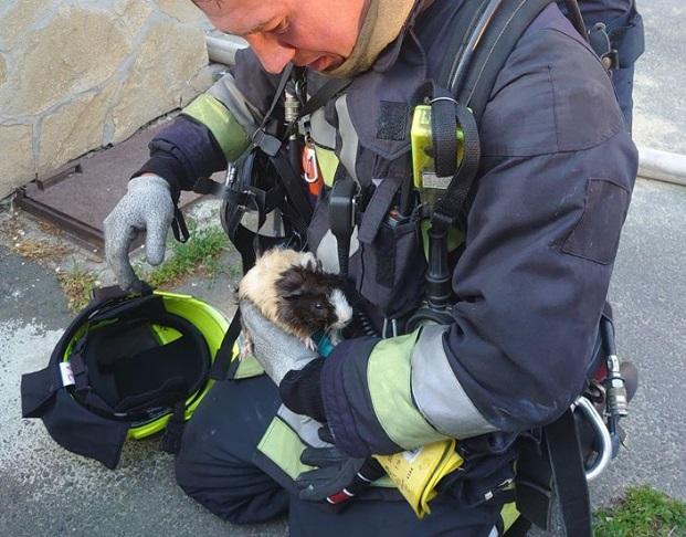 Egy égő házból mentették ki a tűzoltók Fagyit, a tengerimalacot a II. kerületben