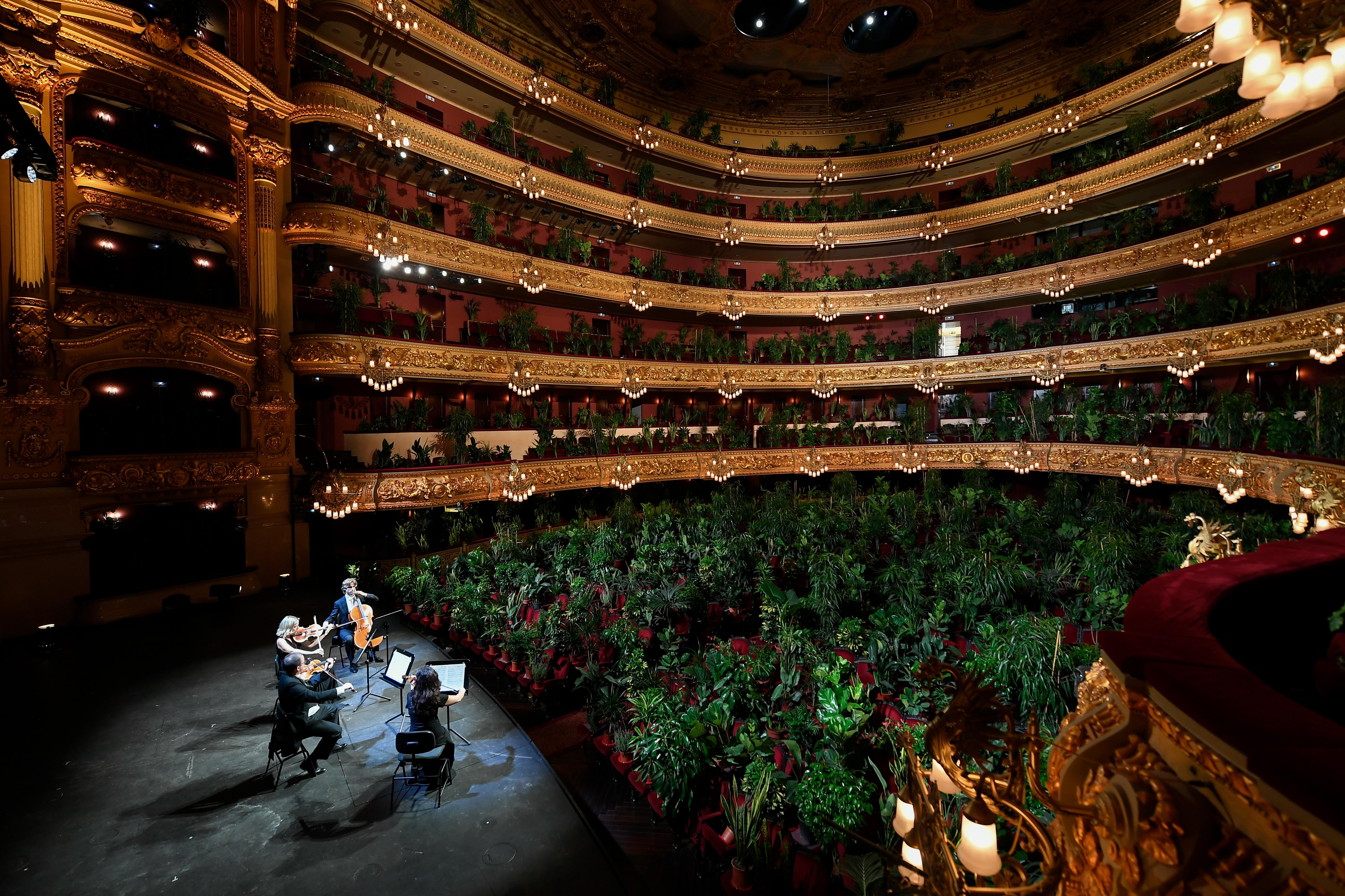 Szobanövényeknek adtak koncertet a barcelonai operában