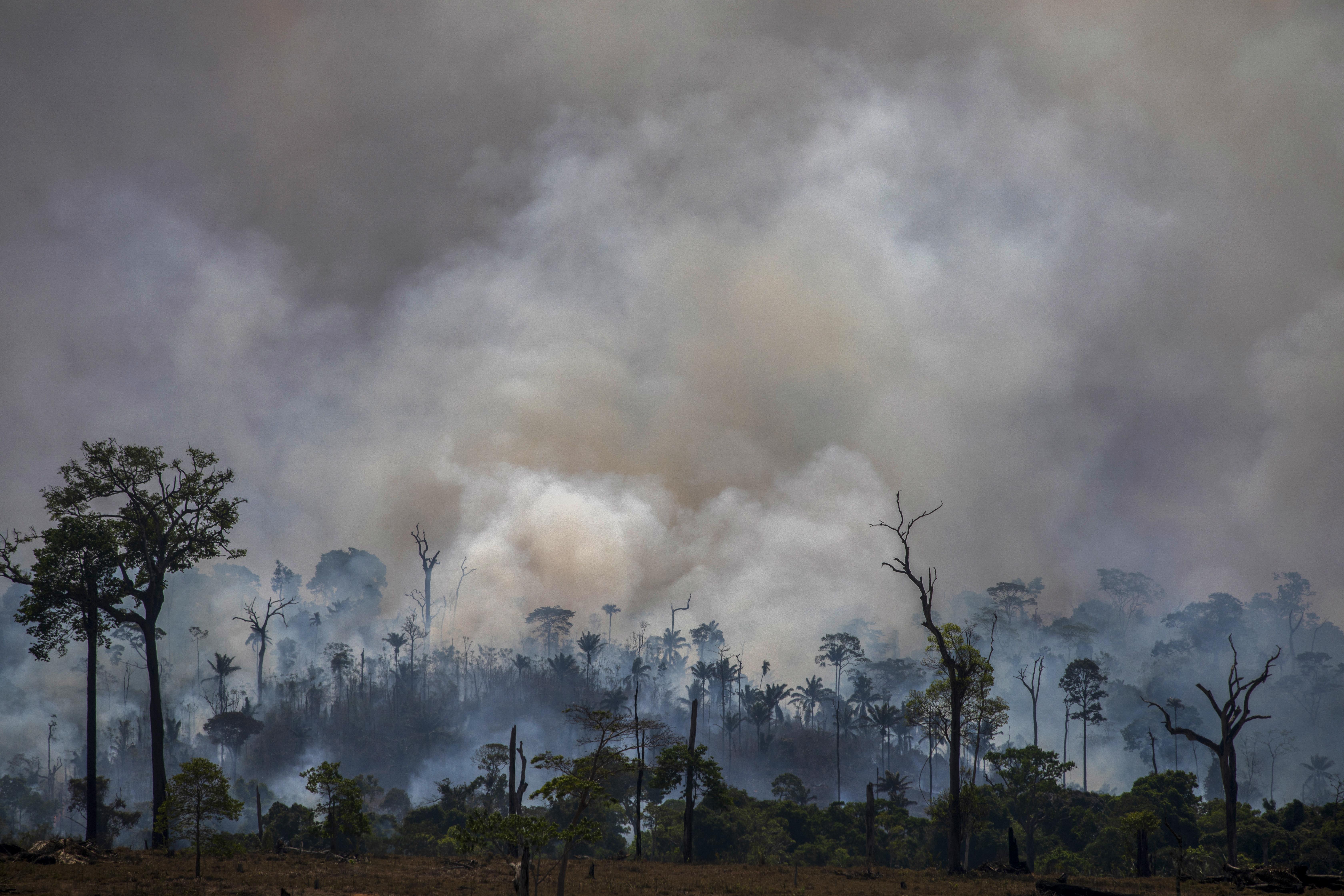 Épp hogy elkezdődött a száraz évszak, máris rég nem látott mennyiségű tűz pusztít az Amazonas esőerdeiben