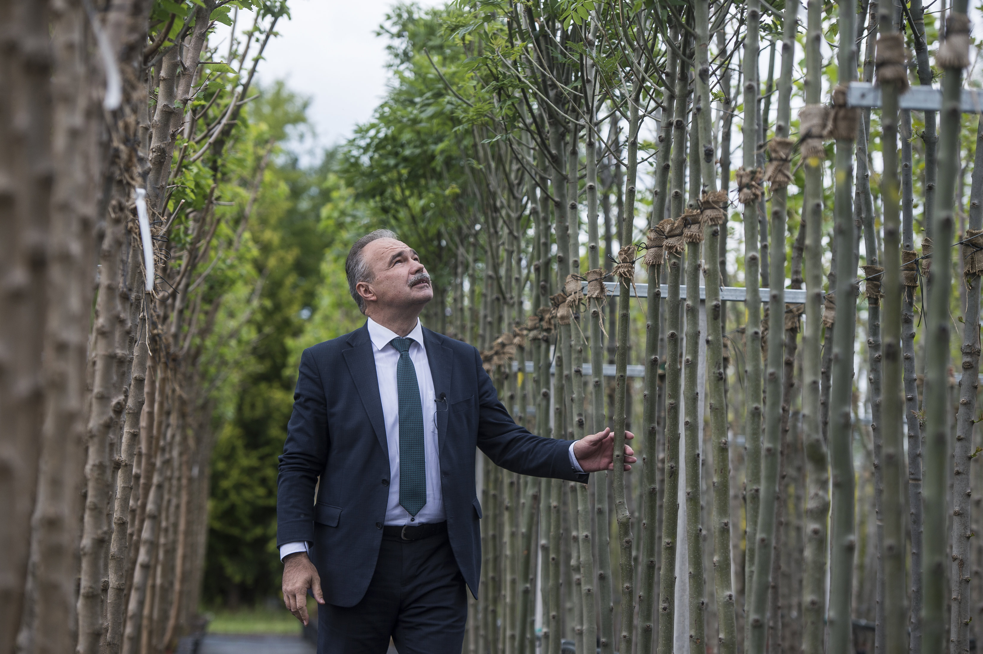 Három-négyszeres áron szállítja a fákat a településekre az Agrárminisztérium programja