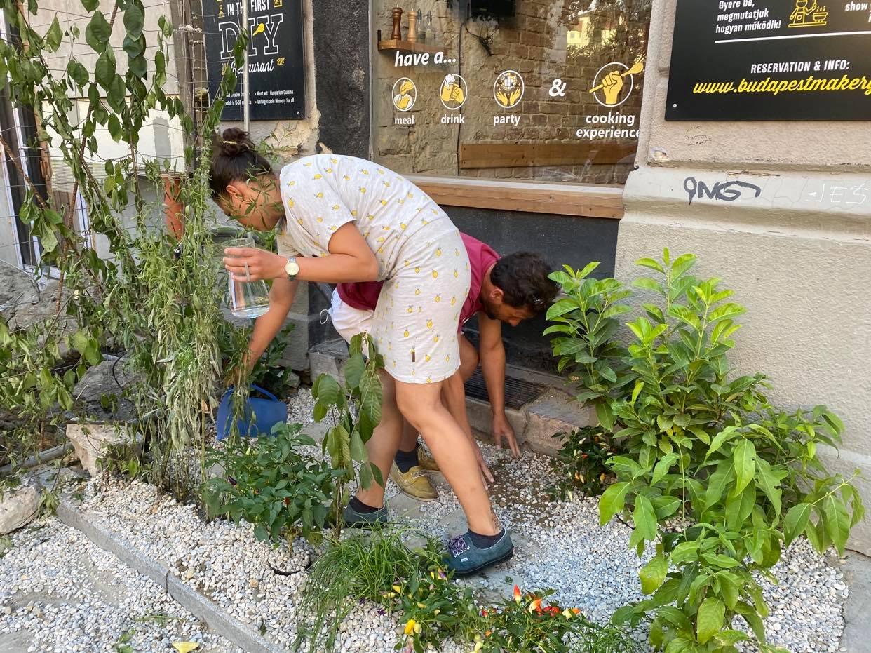 Flower Power: A közteresek csak fenyegetőztek a Dob utcában, de a végén igazából nem jelentették fel a gerillakertet, amit egy betemetetlen gödörbe ültettek