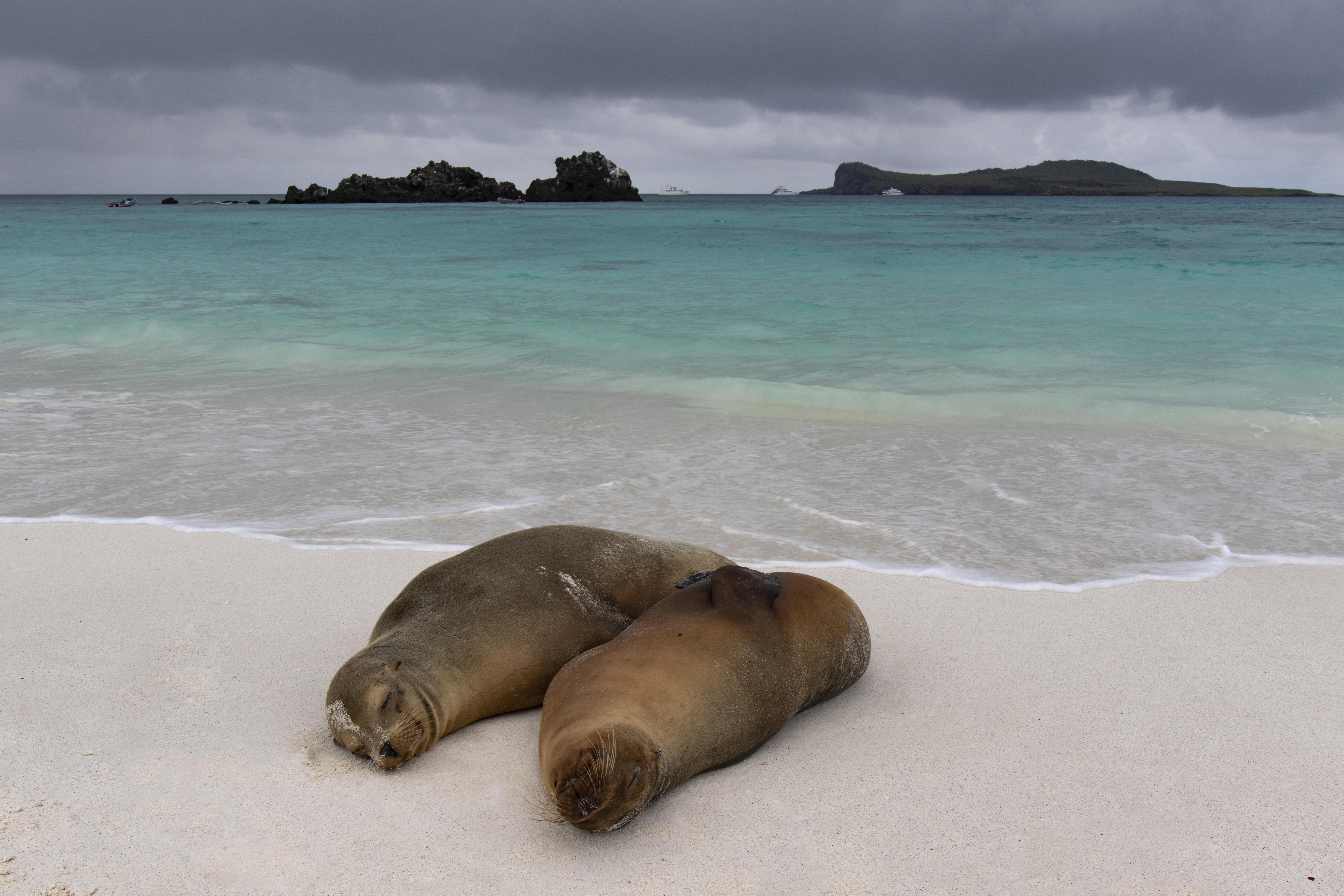 Riadót fújtak a Galápagos-szigeteknél, miután 260 kínai halászhajó jelent meg a térségben