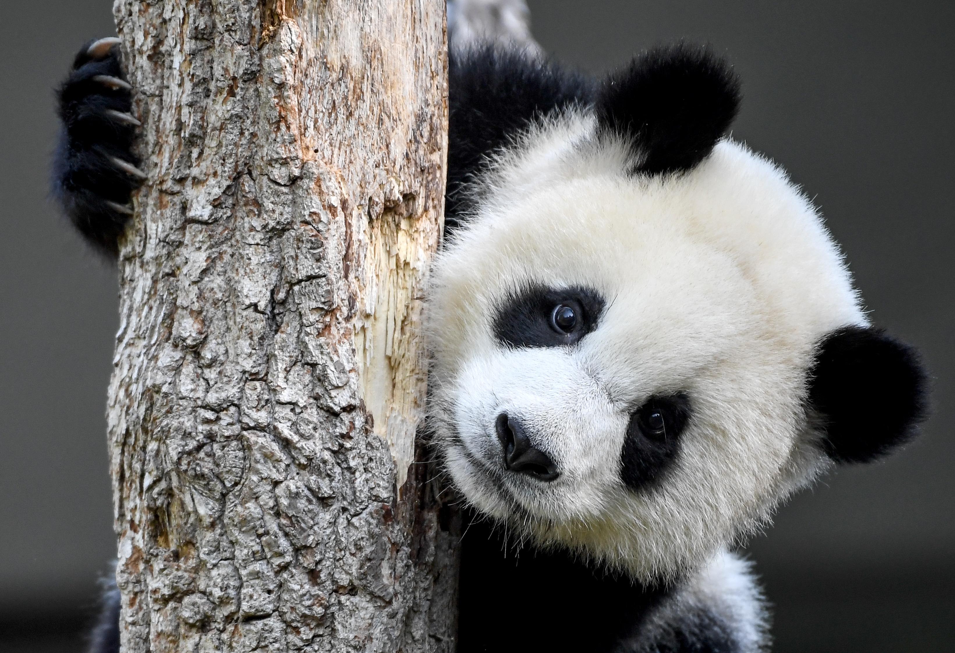 550 emlősfaj pusztulhat ki az évszázad végére