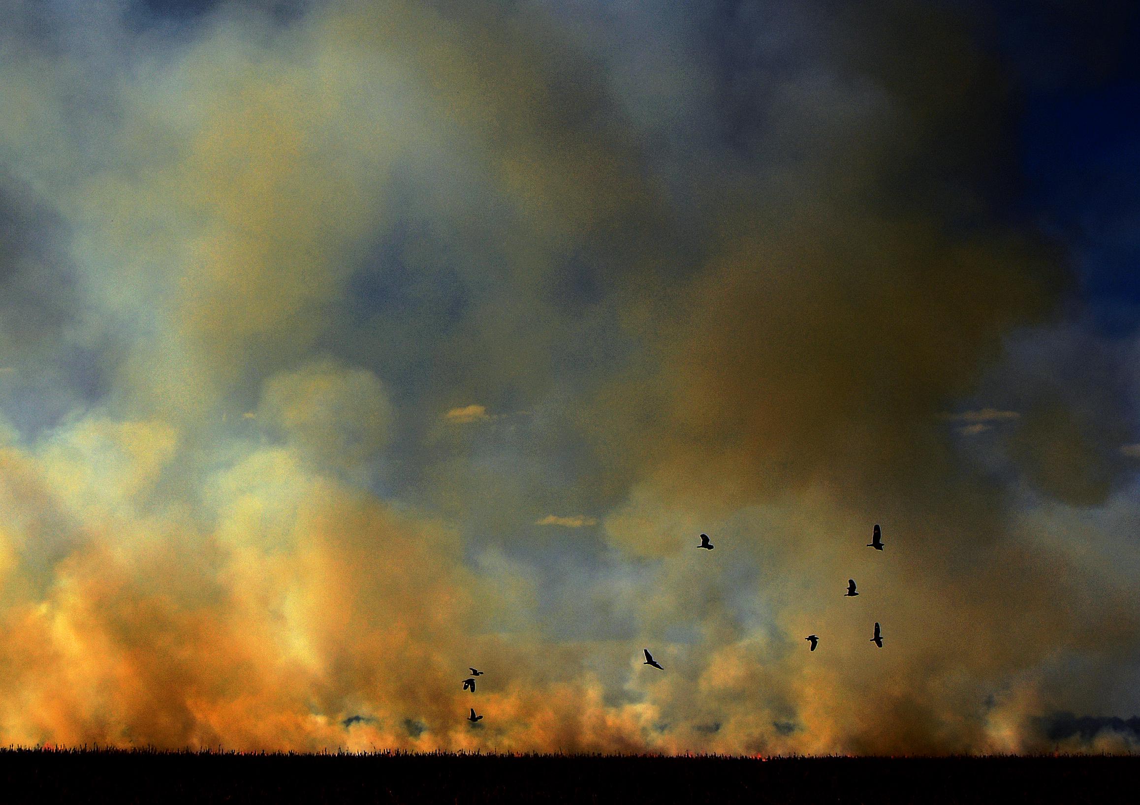 Augusztusban lassult a brazíliai erdőirtás üteme