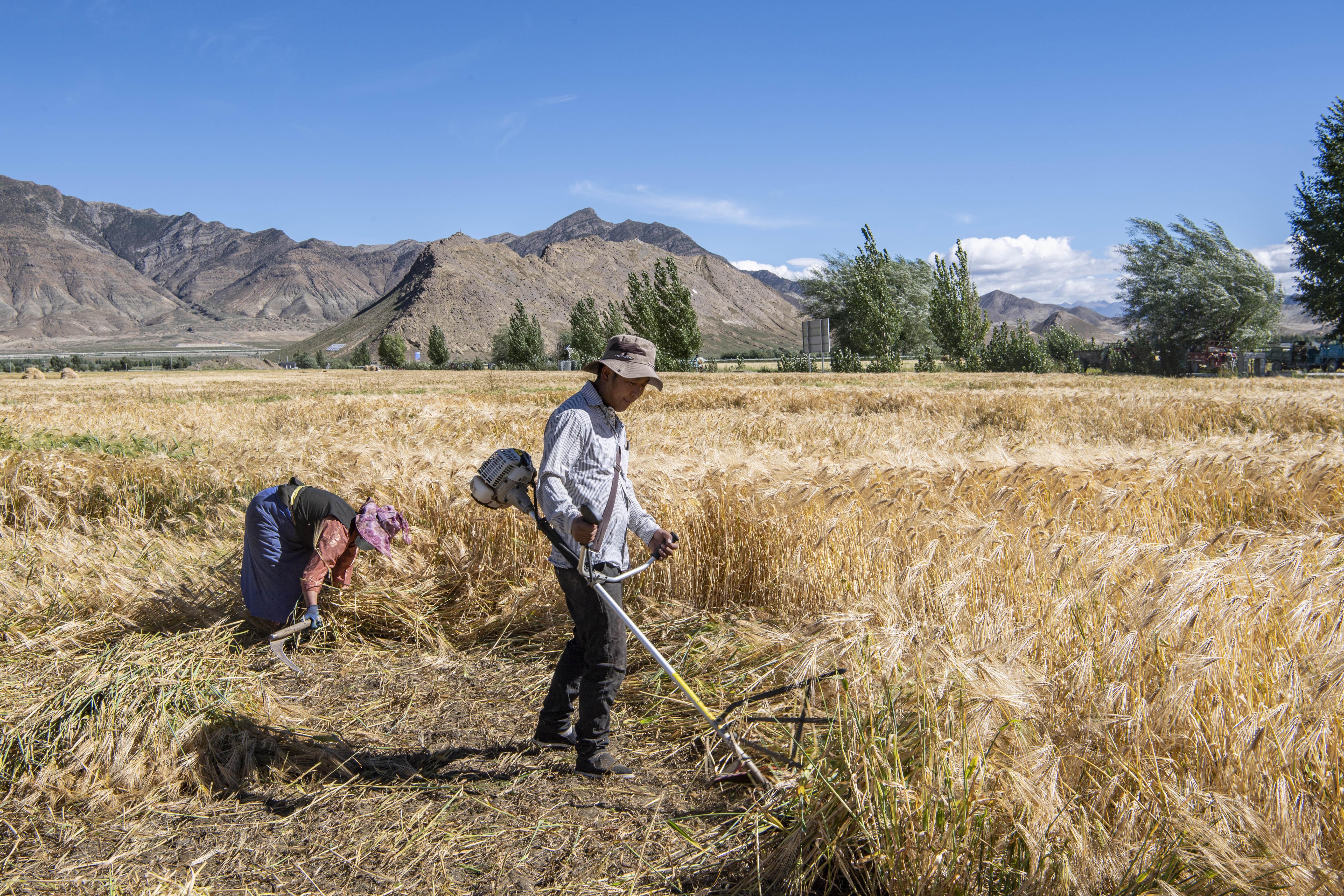 Egy tanulmány szerint 500 ezer embert kényszerítettek a kínaiak munka- és kiképzőtáborokba Tibetben