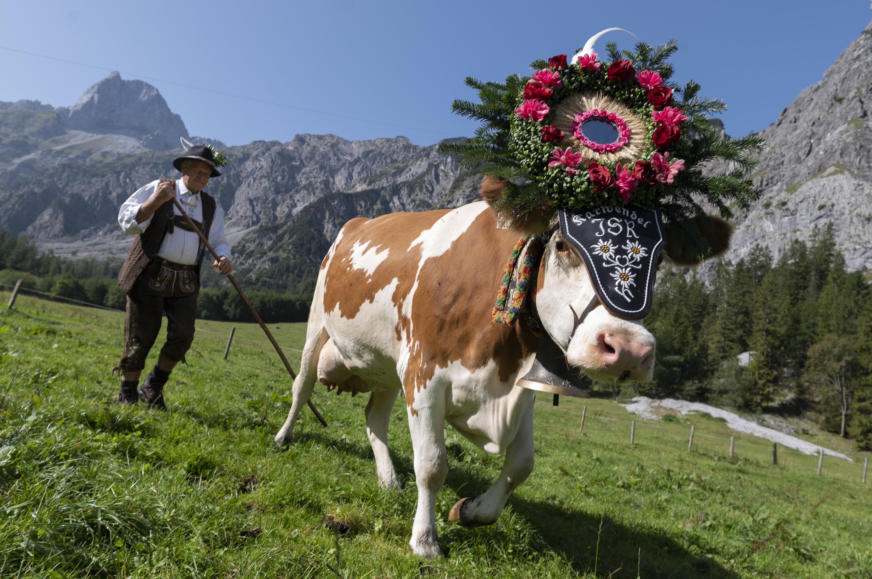 Durvul a sampány: dögöljön meg az argentin melósok tehene is, rövidnadrágban!
