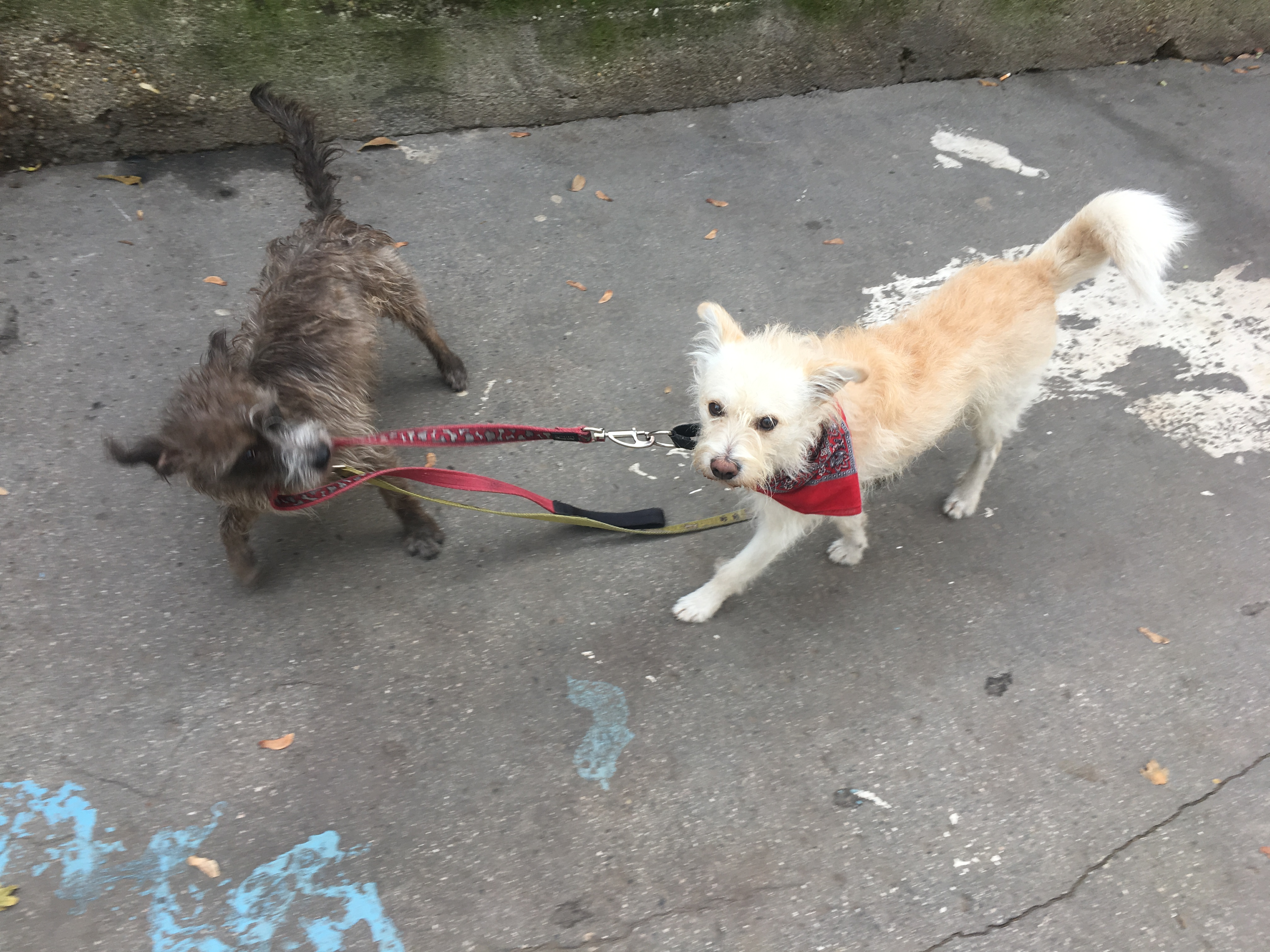 Máshogy látják egymást a kutyák és az emberek