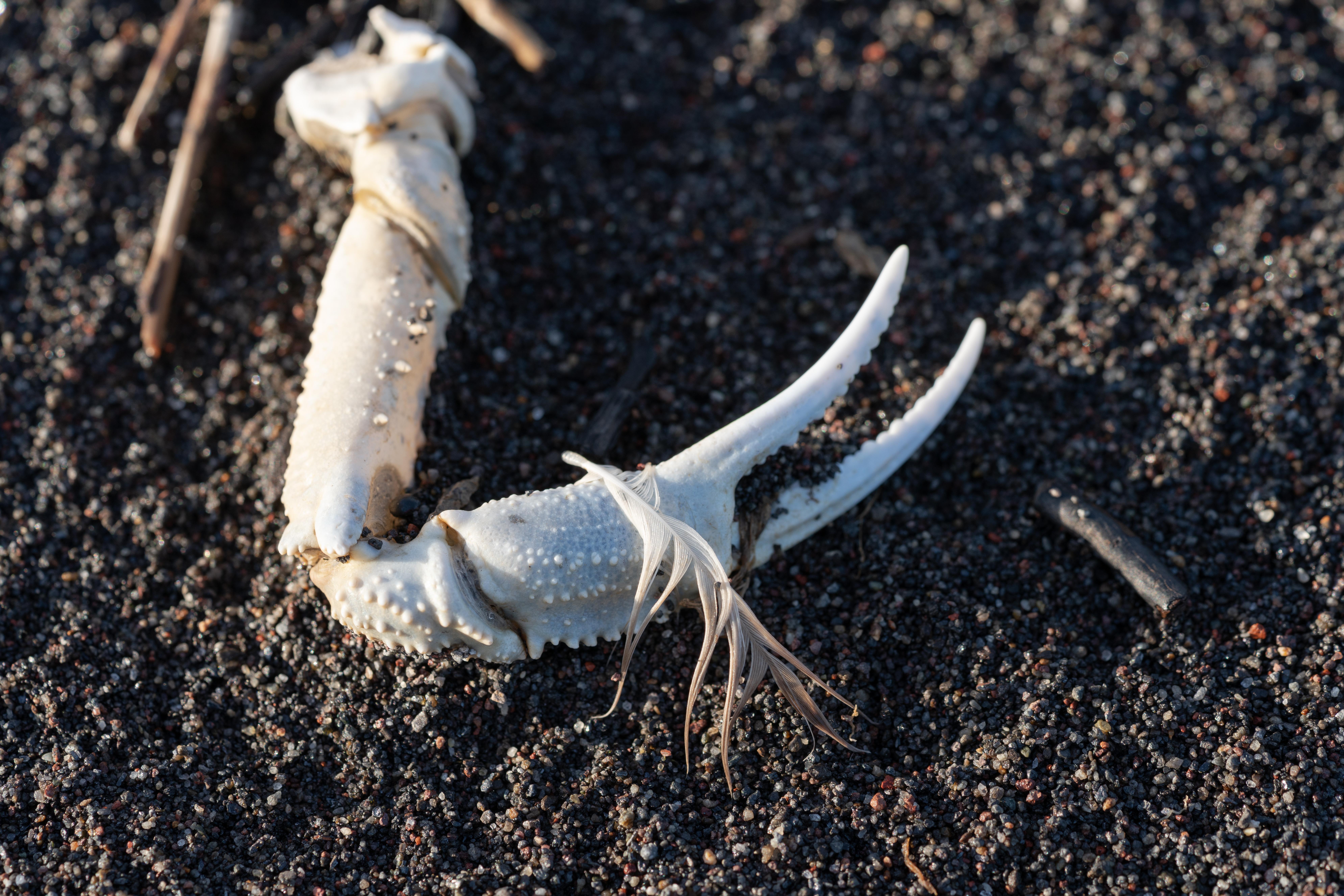 A vízi élővilág 95 százaléka elpusztult egy kamcsatkai partszakaszon