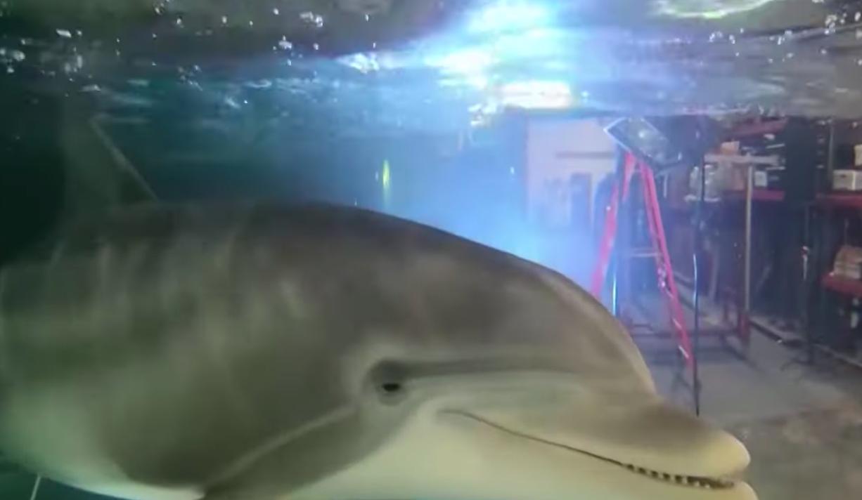 Robotdelfinek helyettesíthetik a fogságban élő állatokat