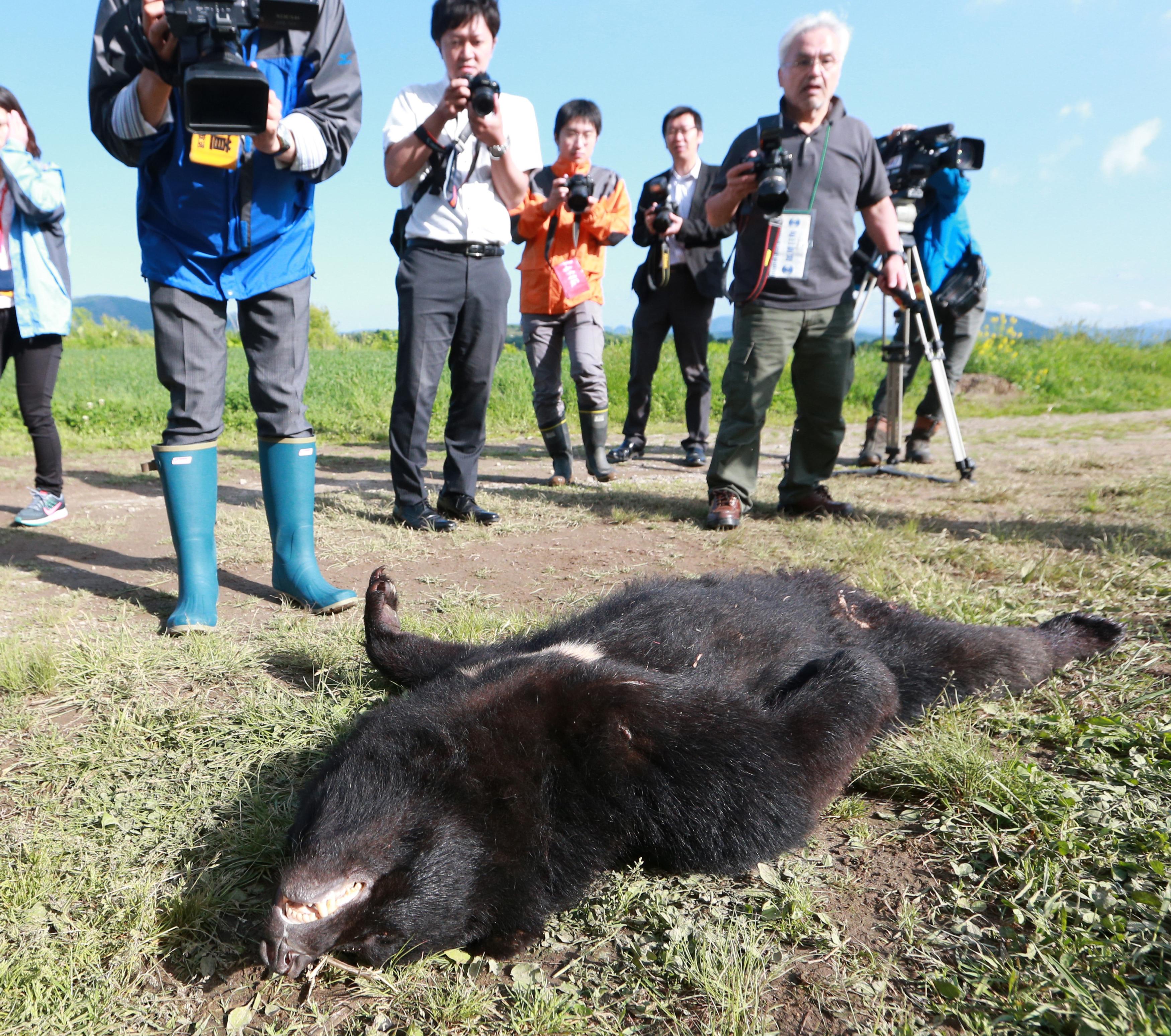 Lelőtték a japán medvét, ami megsebesített négy embert