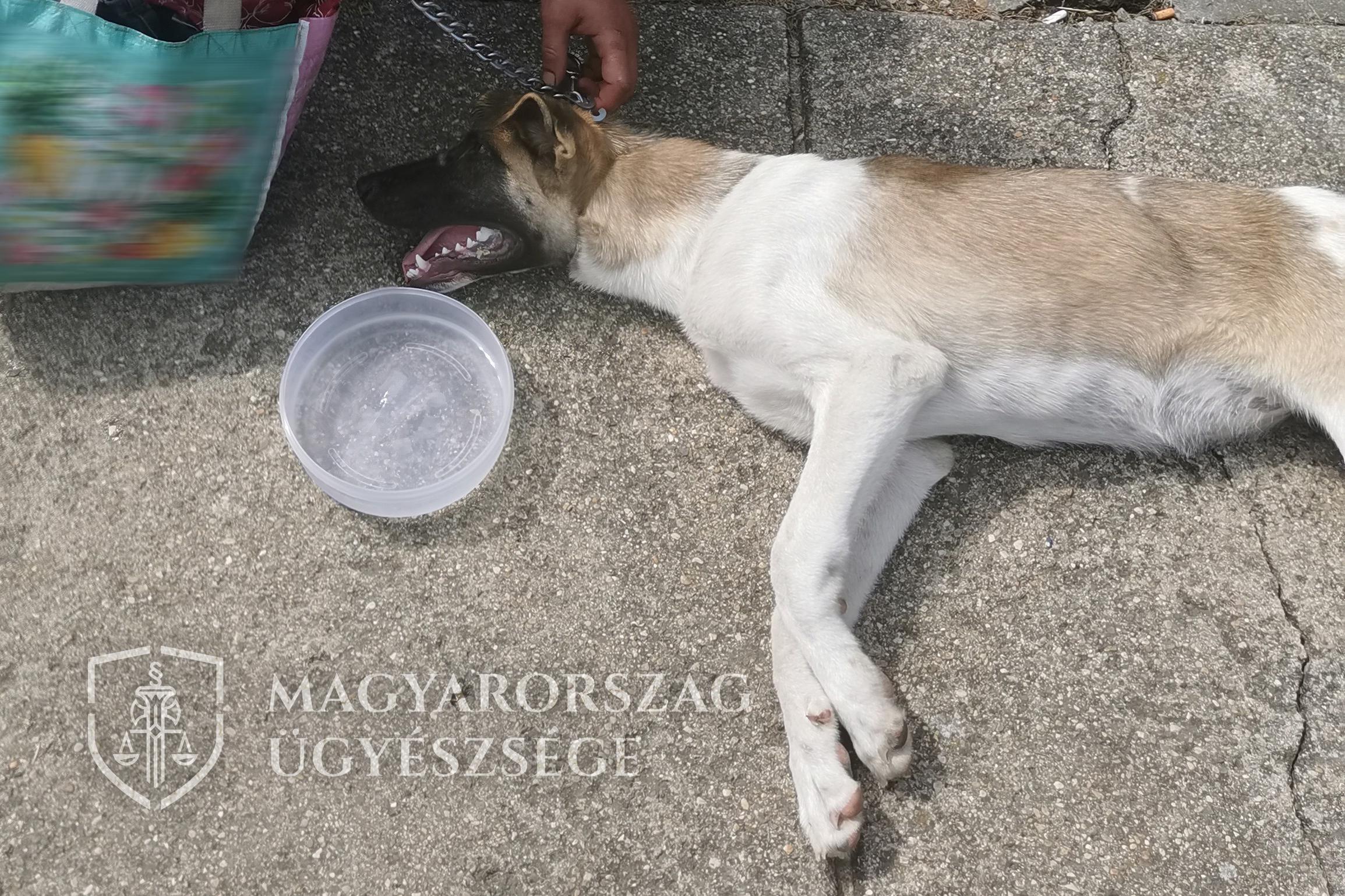 Postás mentette meg a láncon vonszolt kutyát