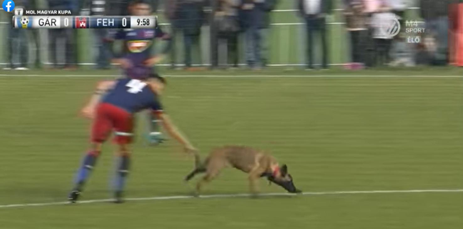 Befutott egy kölyökkutya a Videoton kupameccsén, kicselezte és lefutotta a játékosokat, majd elvitte a labdát