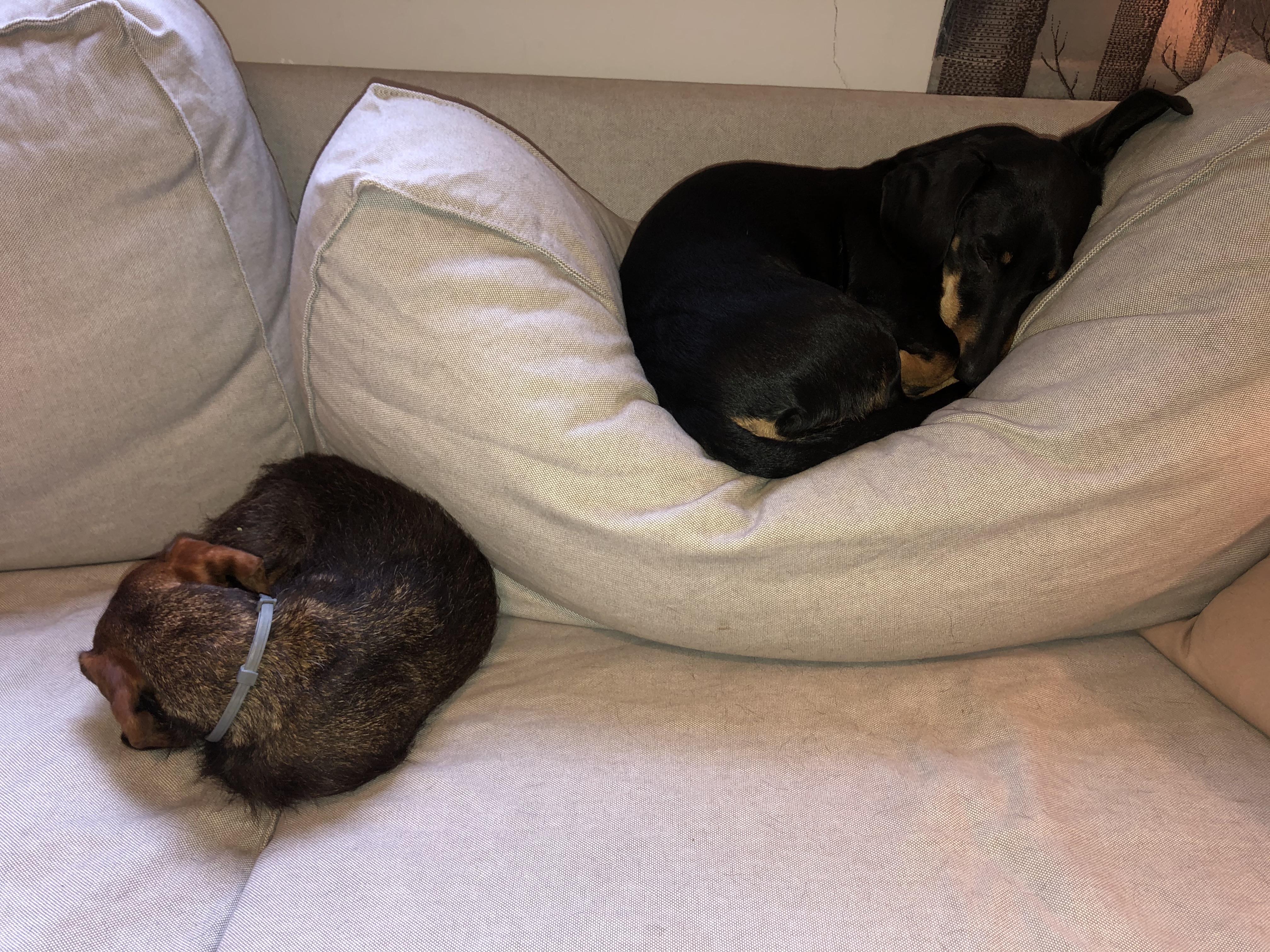 Idióta világrekord: ellopott egy kutyát a menhelyről a nagykanizsai tinilány