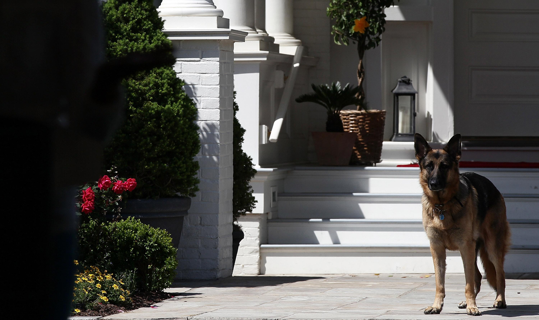 Visszatérnek a Fehér Házba Joe Biden kutyái