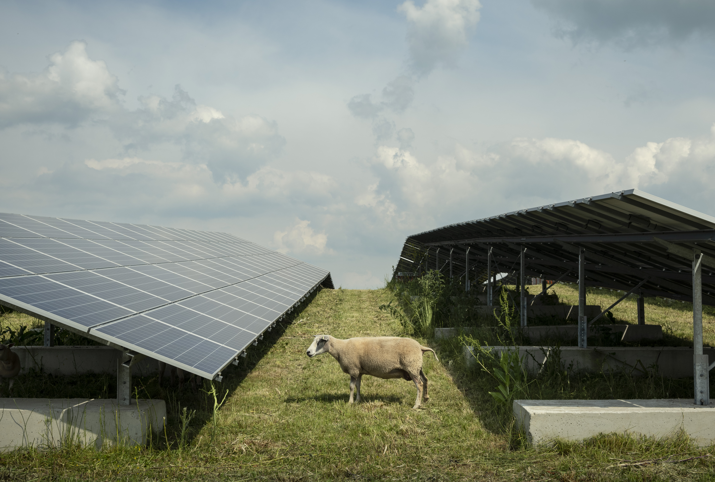 Egymilliárdos áfacsalással vádolnak napelemes cégek vezetőit