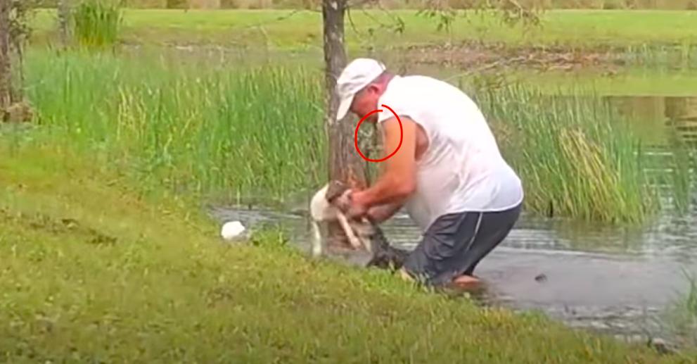 Az élet királya: szivarral a szájában ugrott a vízbe, hogy lebirkózza a kiskutyáját elragadó aligátort a 74 éves floridai nyugdíjas