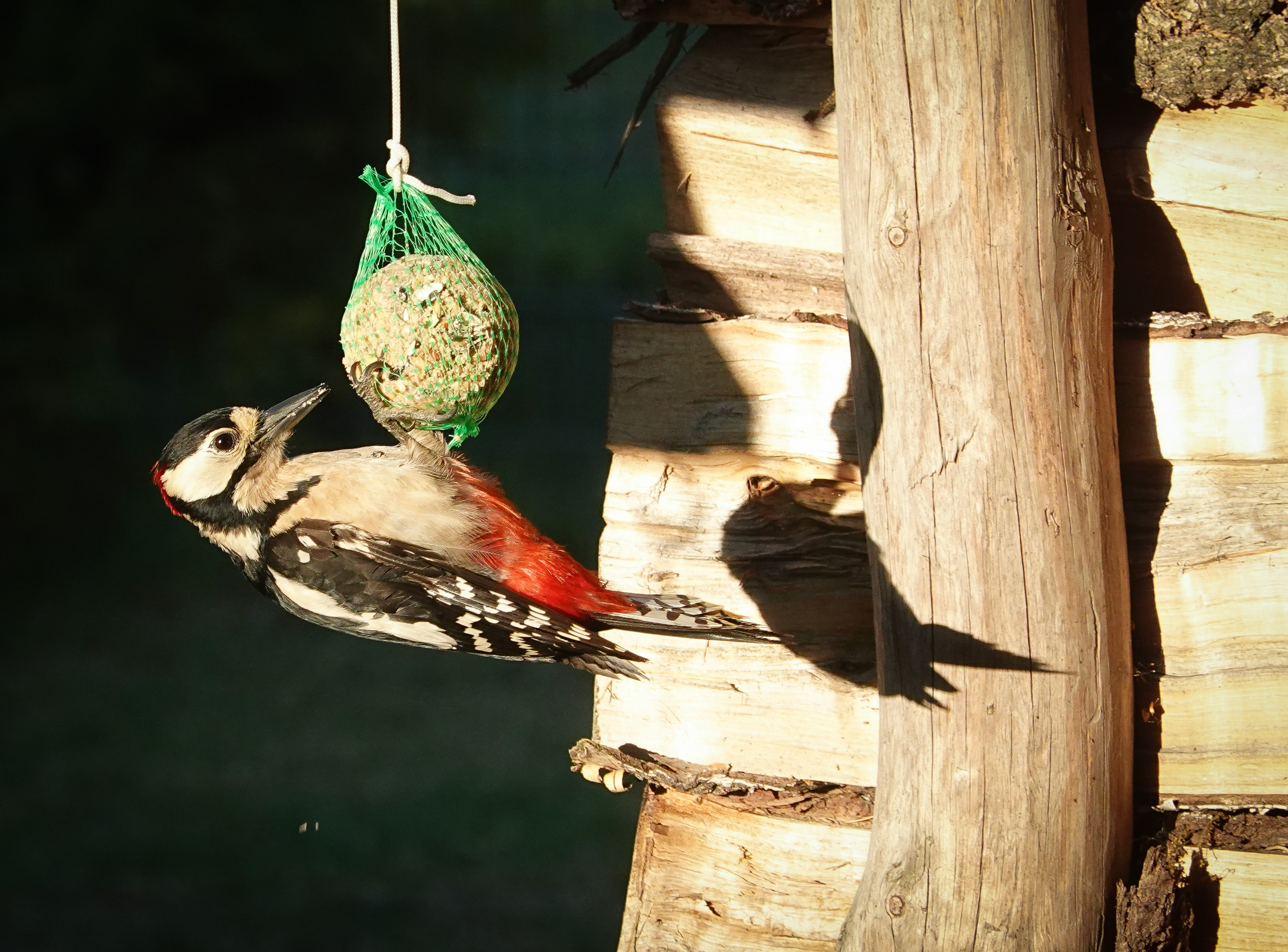 Elkezdődött a madáretetési szezon, de ne kenyeret tegyünk ki nekik