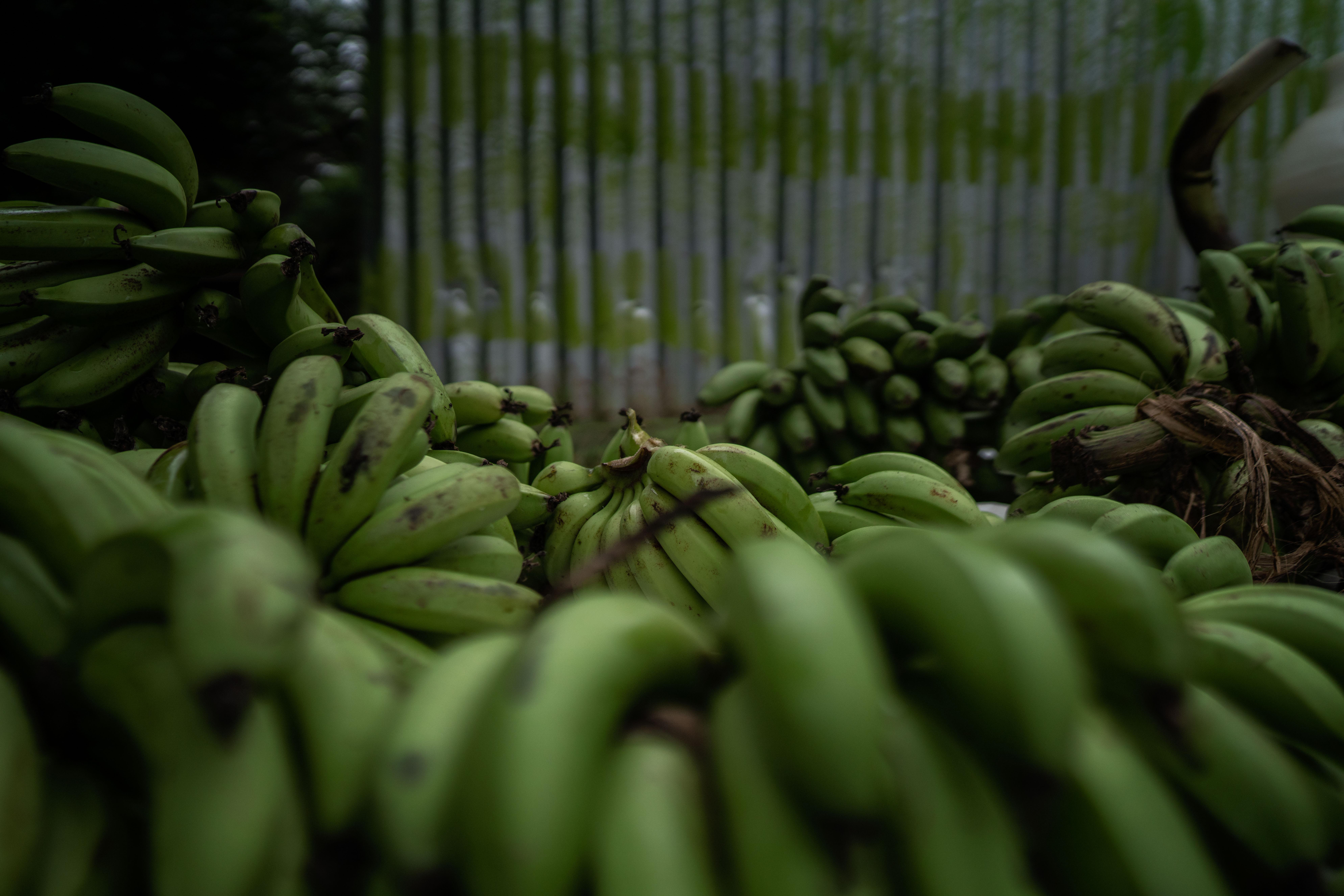 Fél tonna kokain volt a banán között