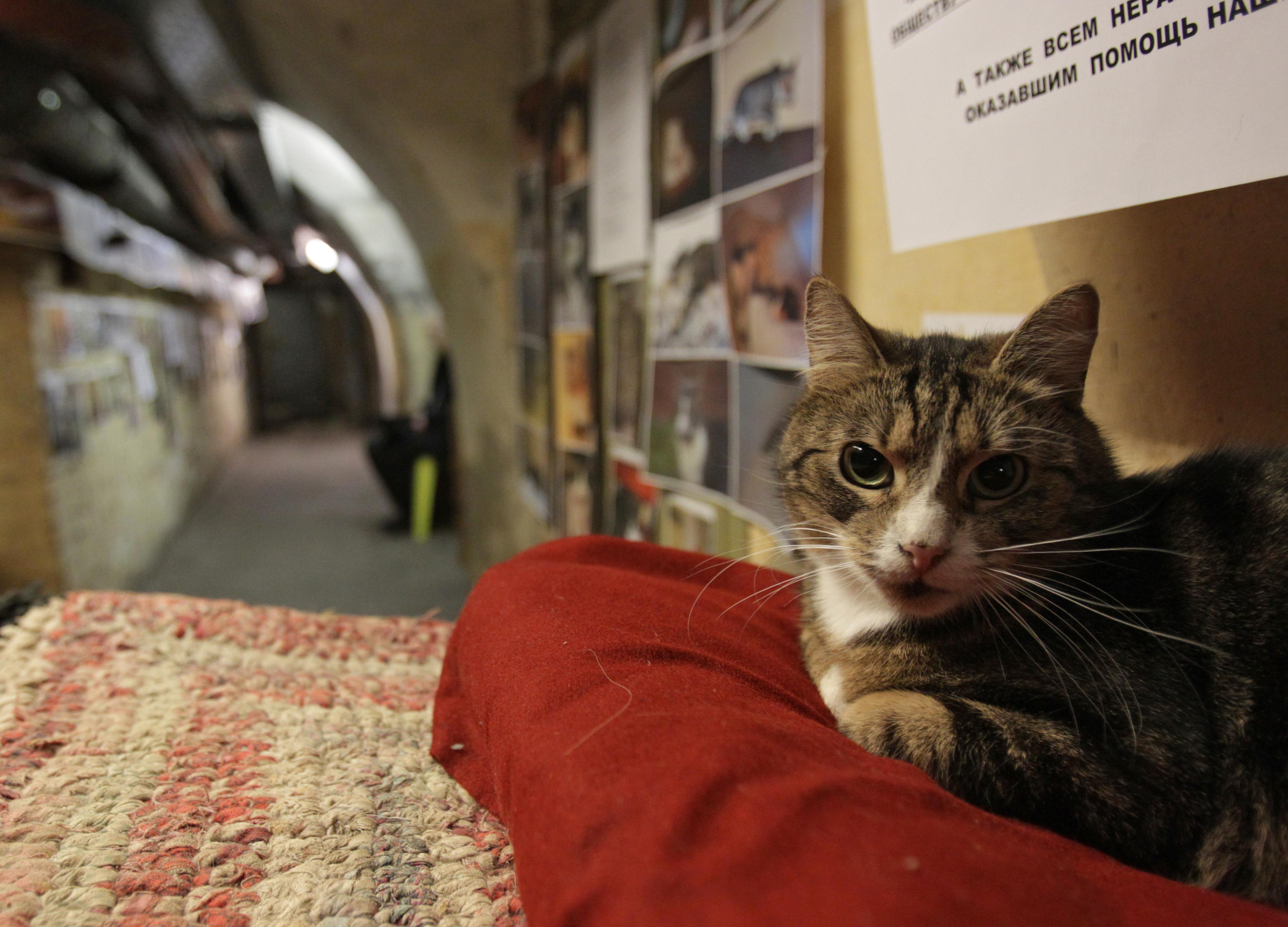 Az Ermitázs alagsorában élő 50 macskára hagyta örökségét egy francia úr