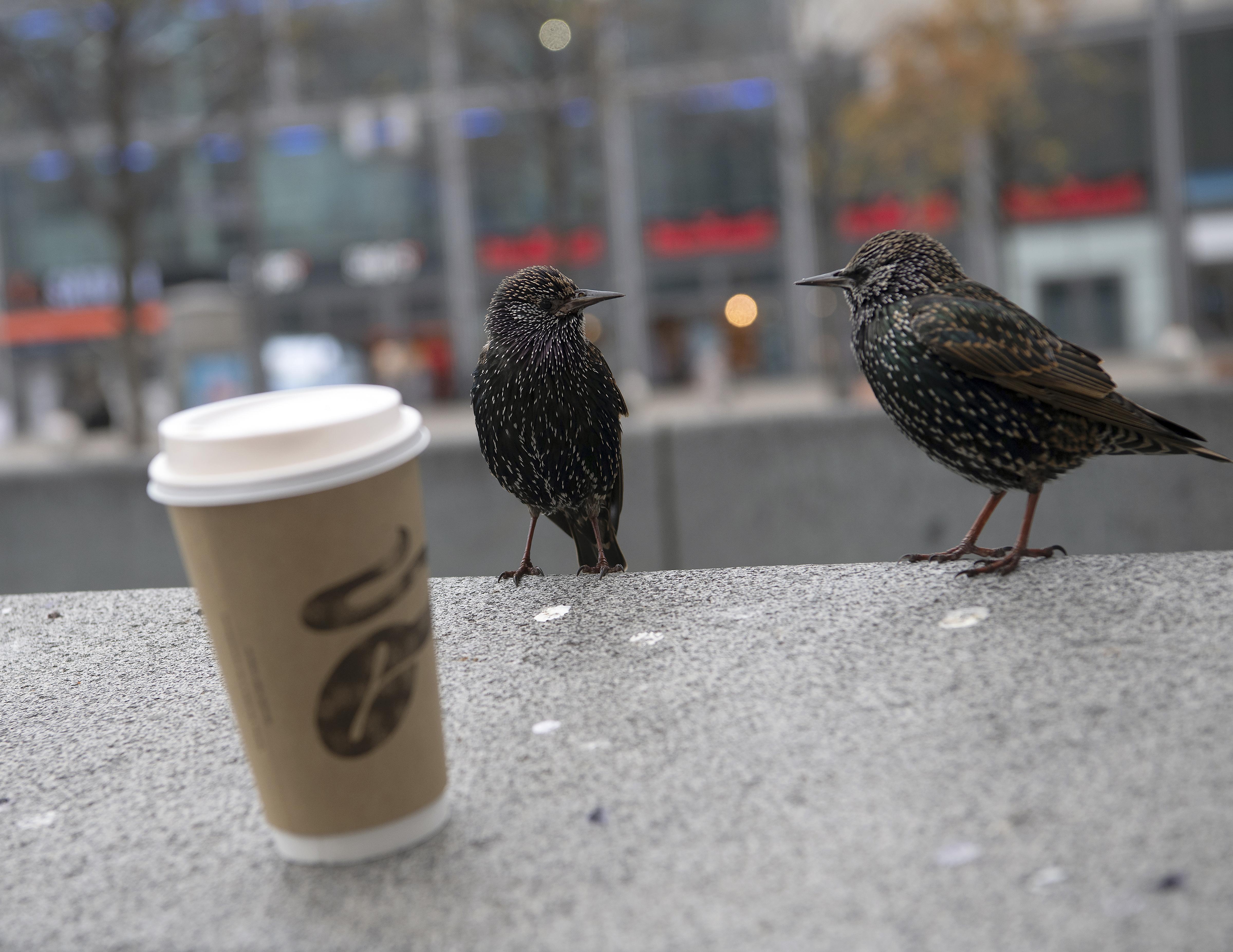 A cseh kormány betiltotta az elviteles kávét a járvány miatt