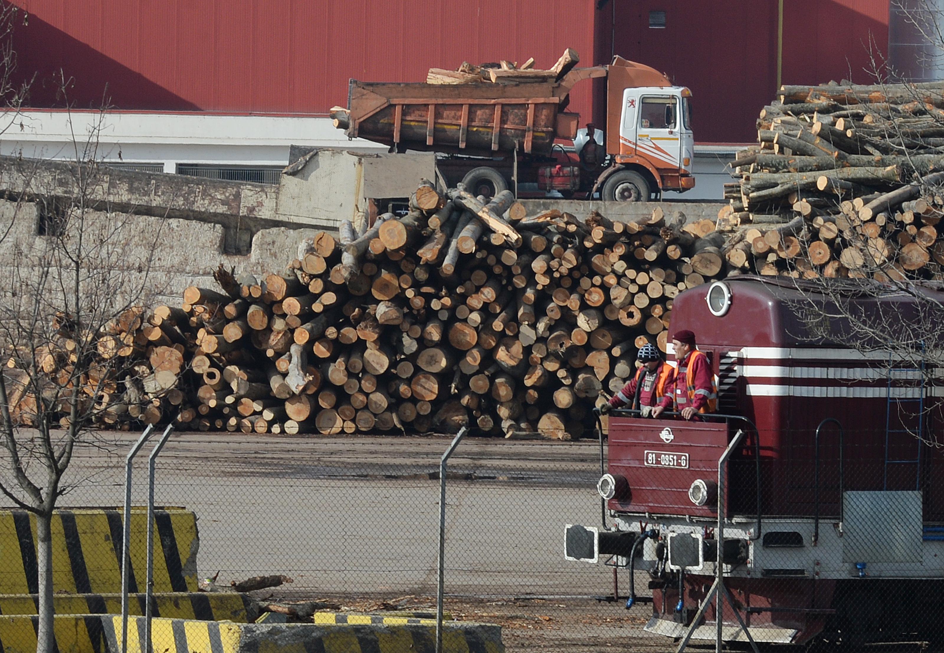 A tilalom ellenére több mint 100 ezer tonna illegálisan kivágott fa érkezett Oroszországból az EU-ba