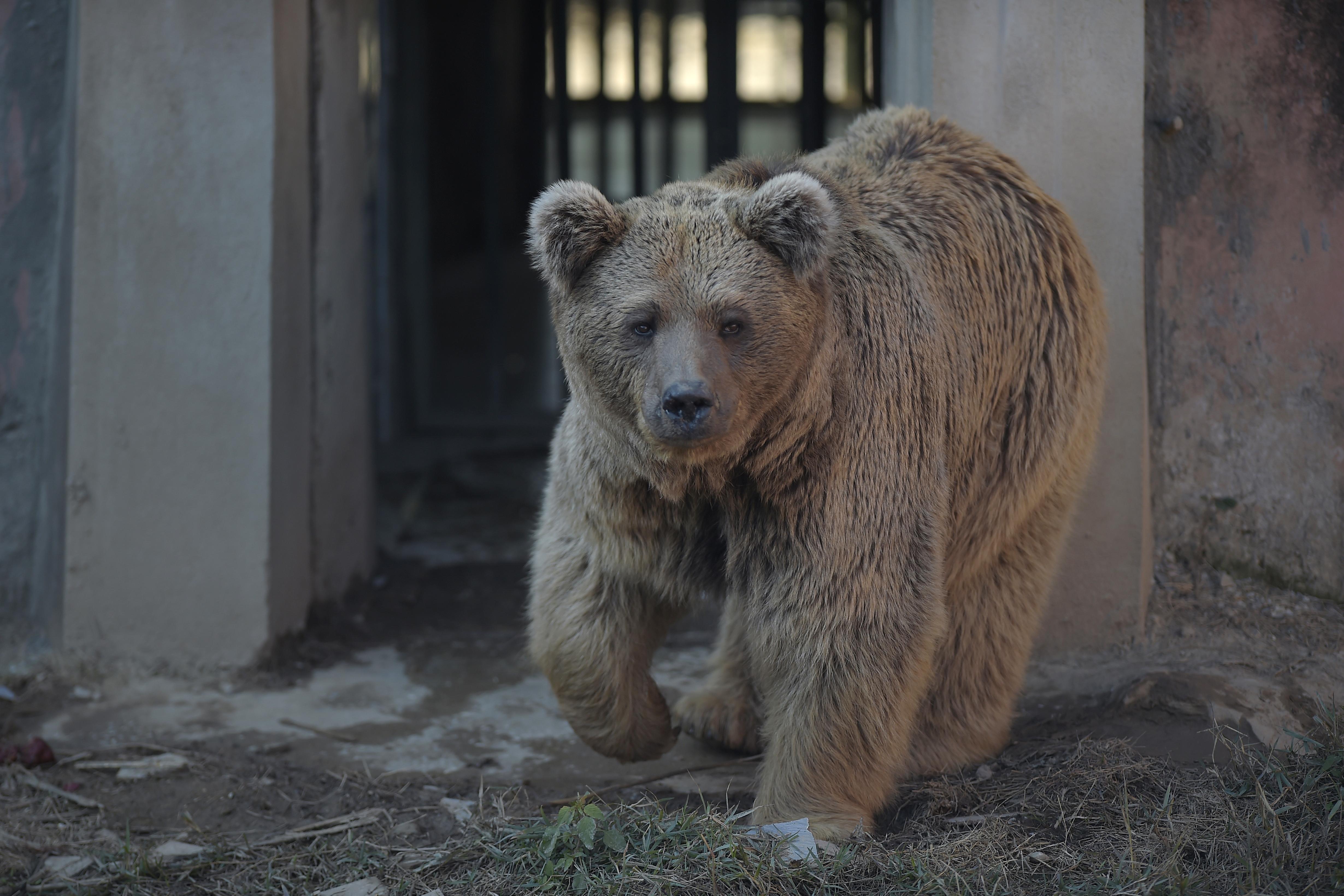 Végleg bezárták a hírhedt pakisztáni állatkertet