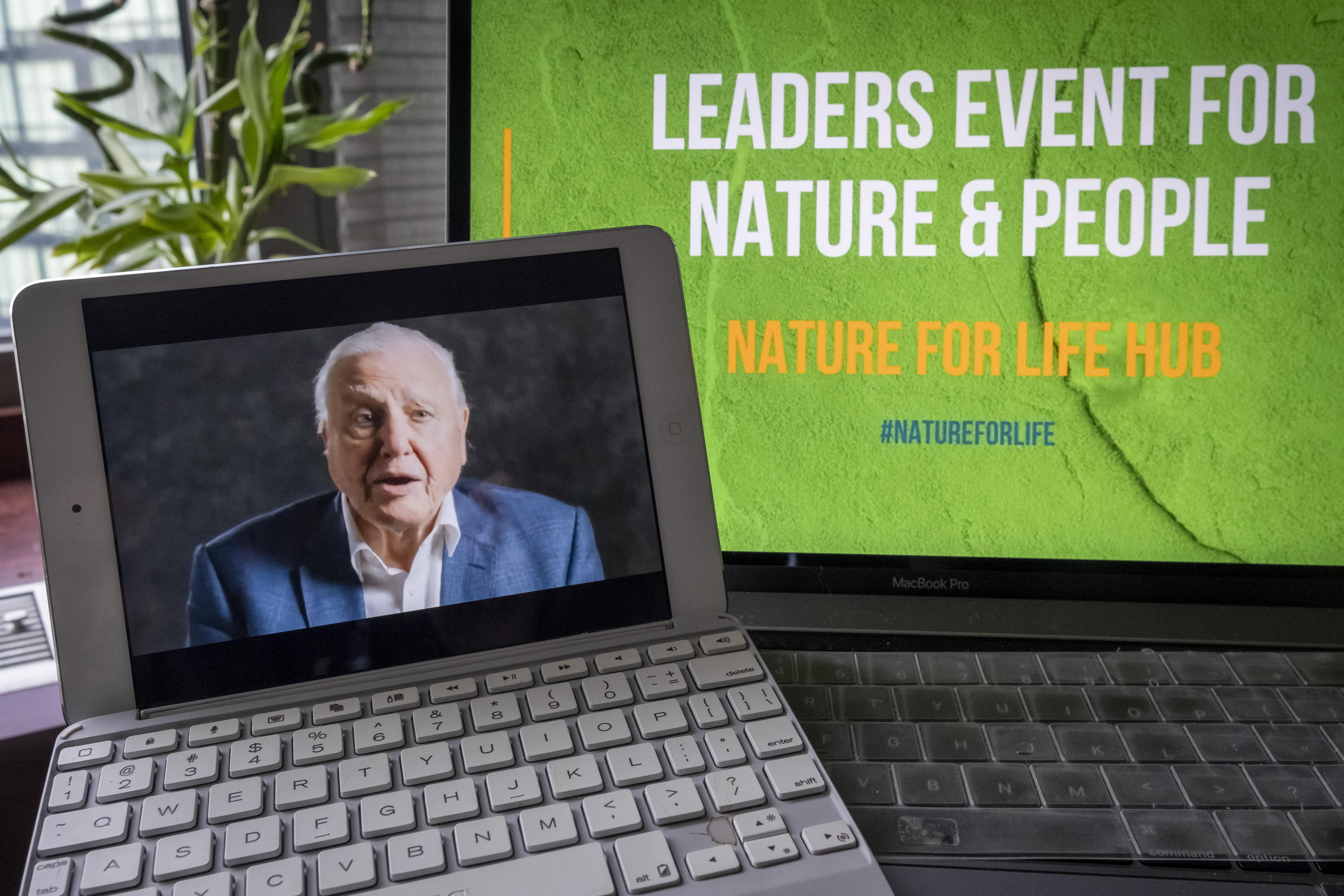 David Attenborough a járvány alatt is összedobott egy új sorozatot, amit januárban mutatnak be