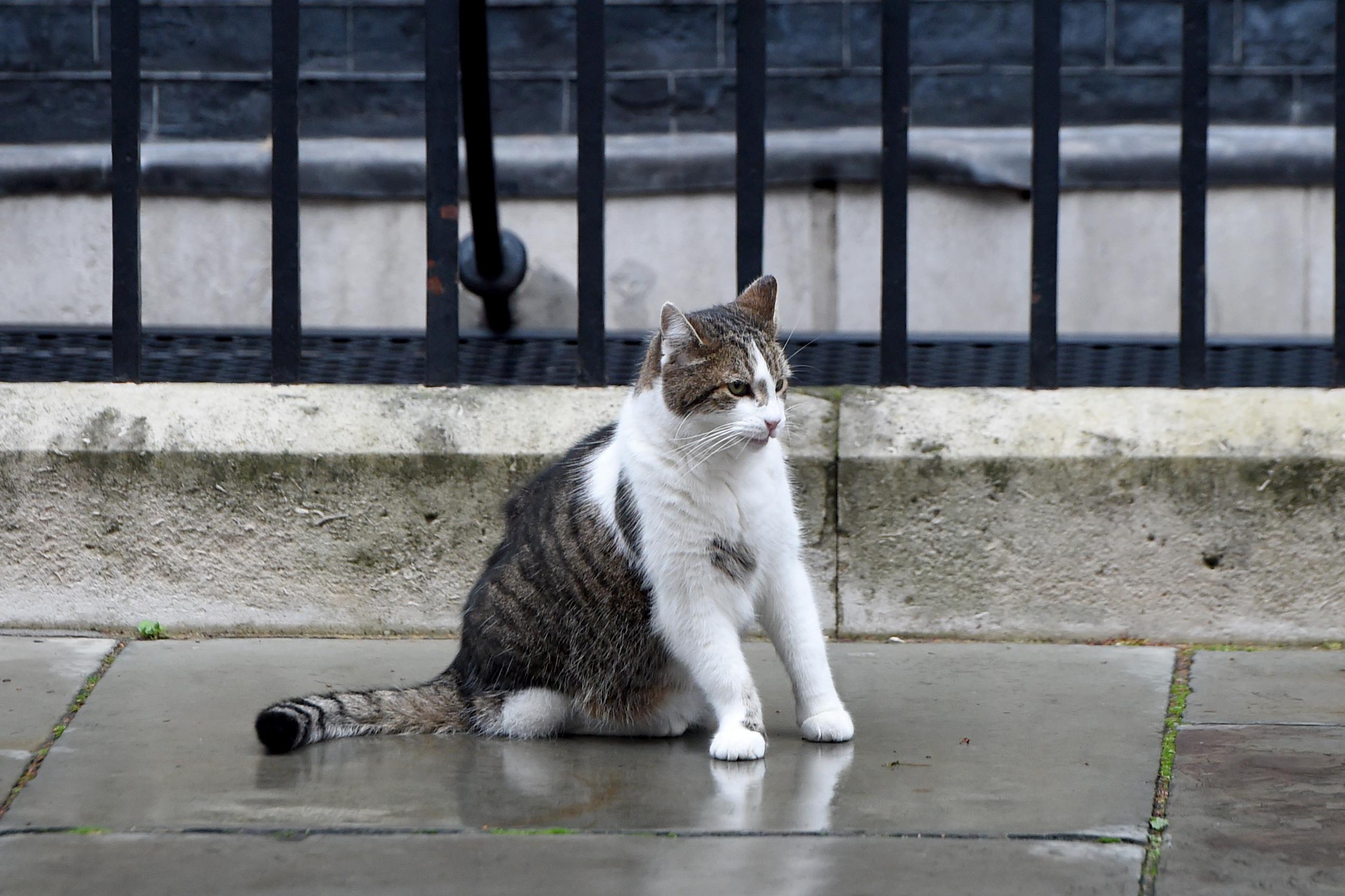 Majdnem a kamerák előtt végzett ki egy galambot Boris Johnson macskája