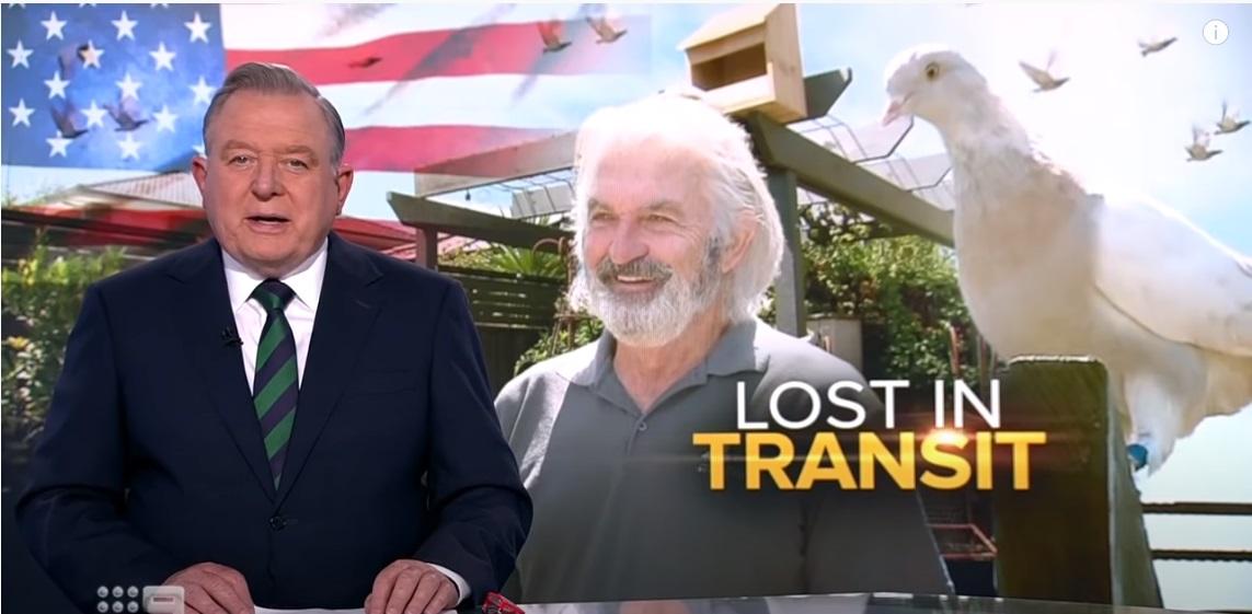 Amerikából Ausztráliába utazott a versenygalamb, azóta új, Madár nevű gazdája kertjében dekkol, de betegségeket hordozhat, ami a vesztét jelentheti