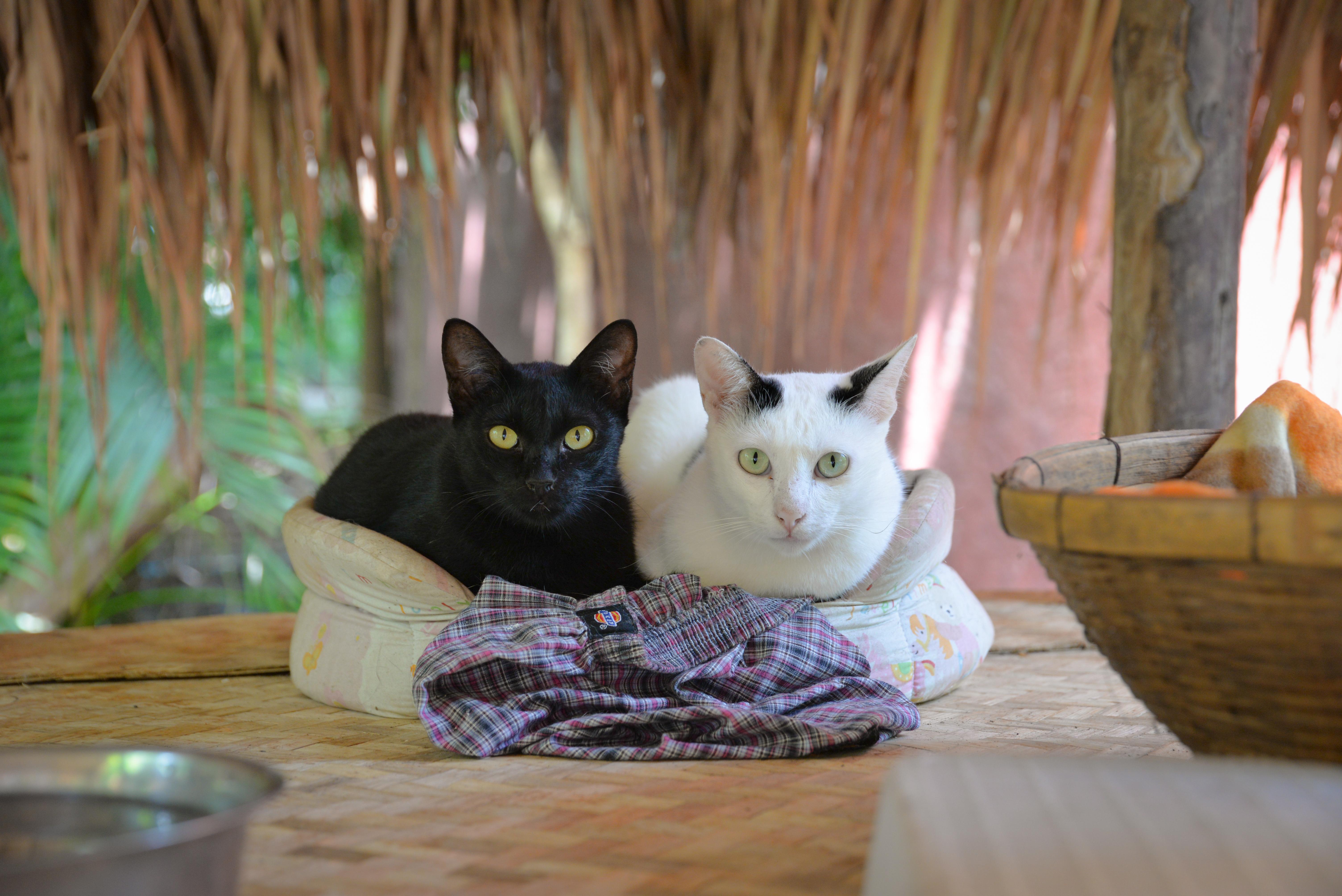 Orbán: Mindegy, hogy a macska fekete vagy fehér, csak fogja meg az egeret