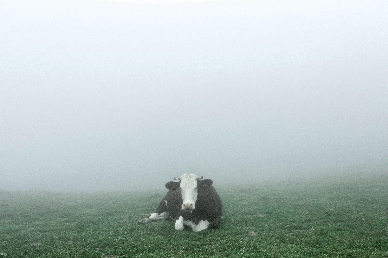 Köd takarja ki a tavaszi időt