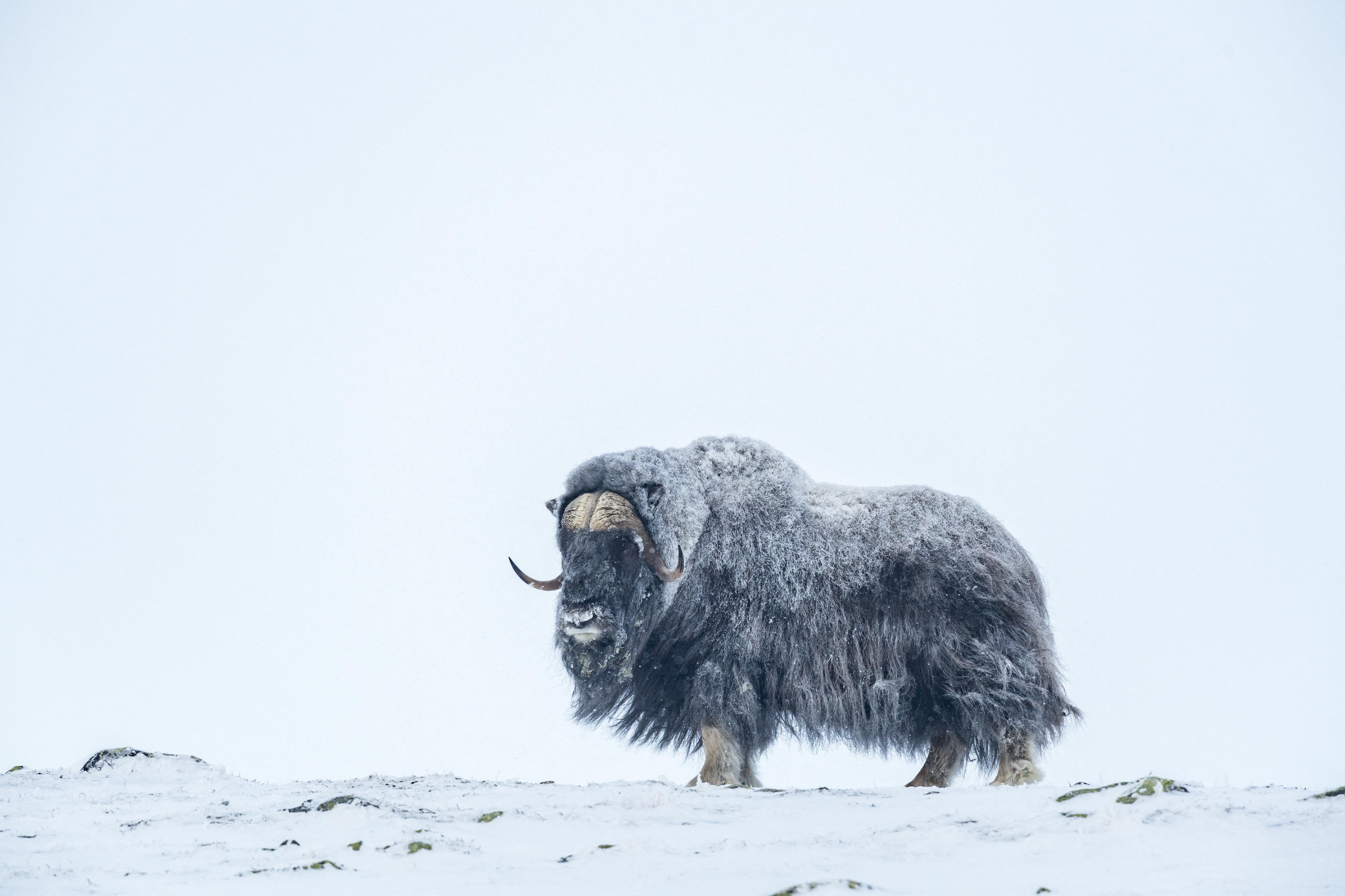 A jövő hét végén -20 fok is lehet, ha az országra szakad a szibériai hideg