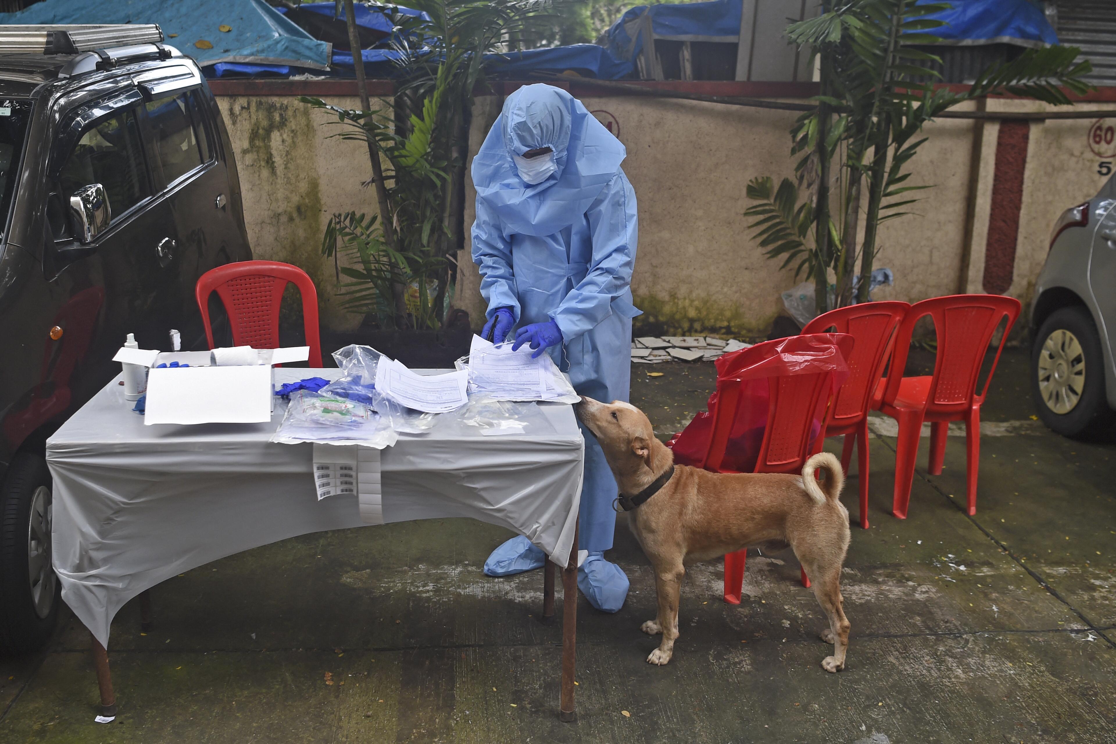 A szöuli hatóságok a háziállatokat is tesztelik koronavírusra