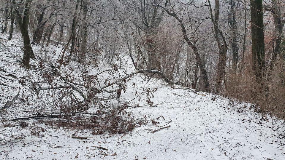 Kerüljék az erdőt, kéri a fagyos időre hivatkozva a Pilisi Parkerdő Zrt.