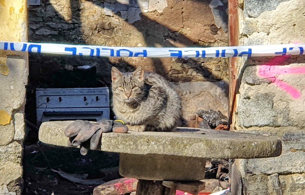 Egy macska segített megtalálni a házigazda holttestét a gércei háztűz után