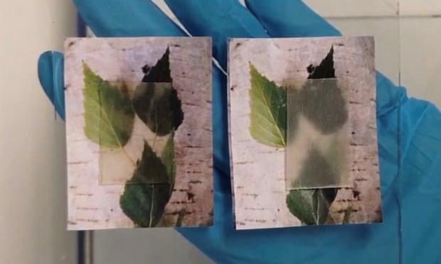 Folynak tovább a kísérletek az áttetsző fa kifejlesztésére