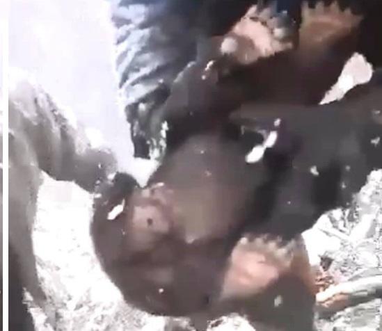 A rendőrség keresi azokat a román erdőmunkásokat, akik négy medvebocsot rángattak ki a barlangjukból