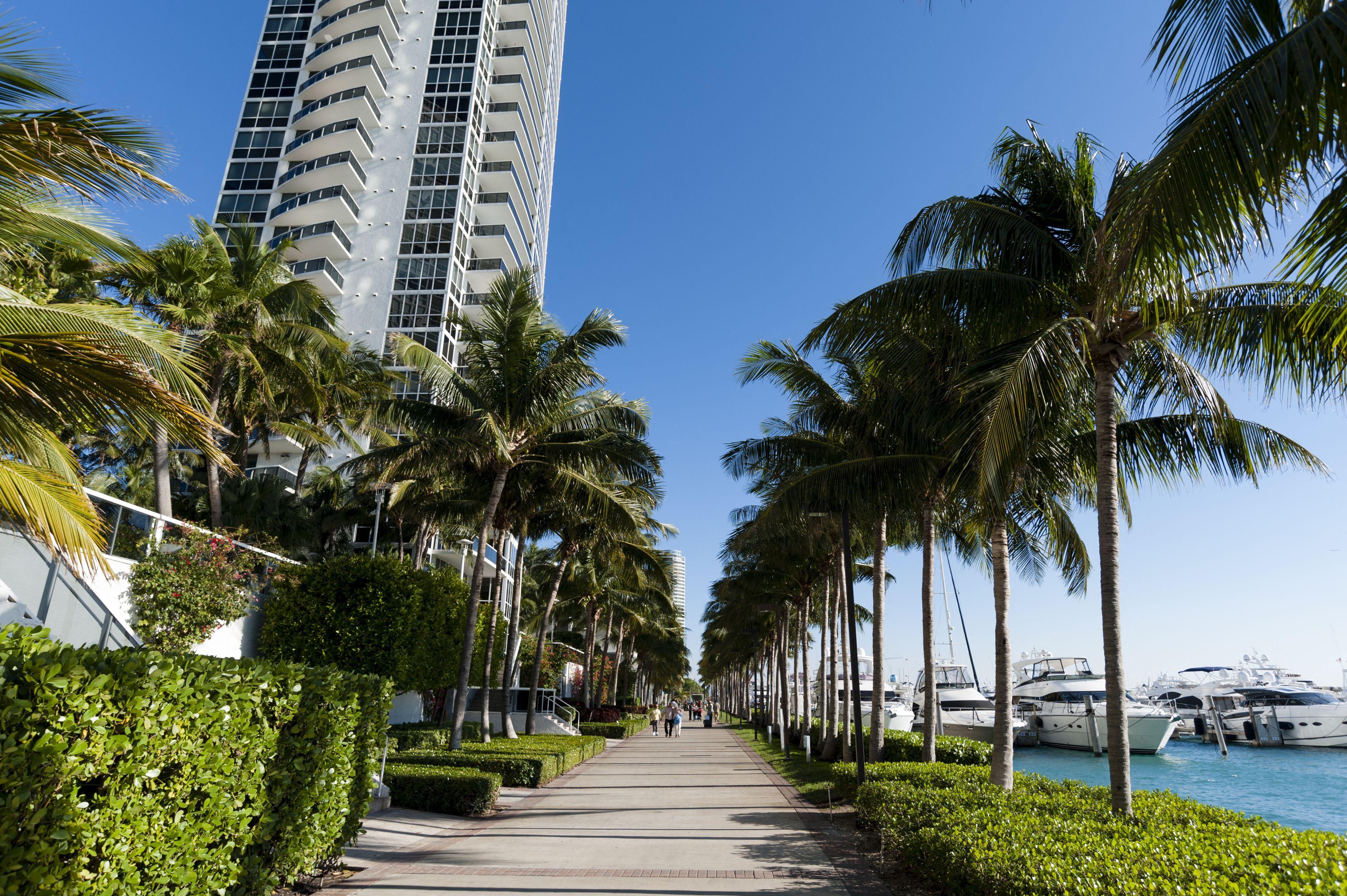 Miamiban a klímaváltozás miatt kivágják a pálmafákat