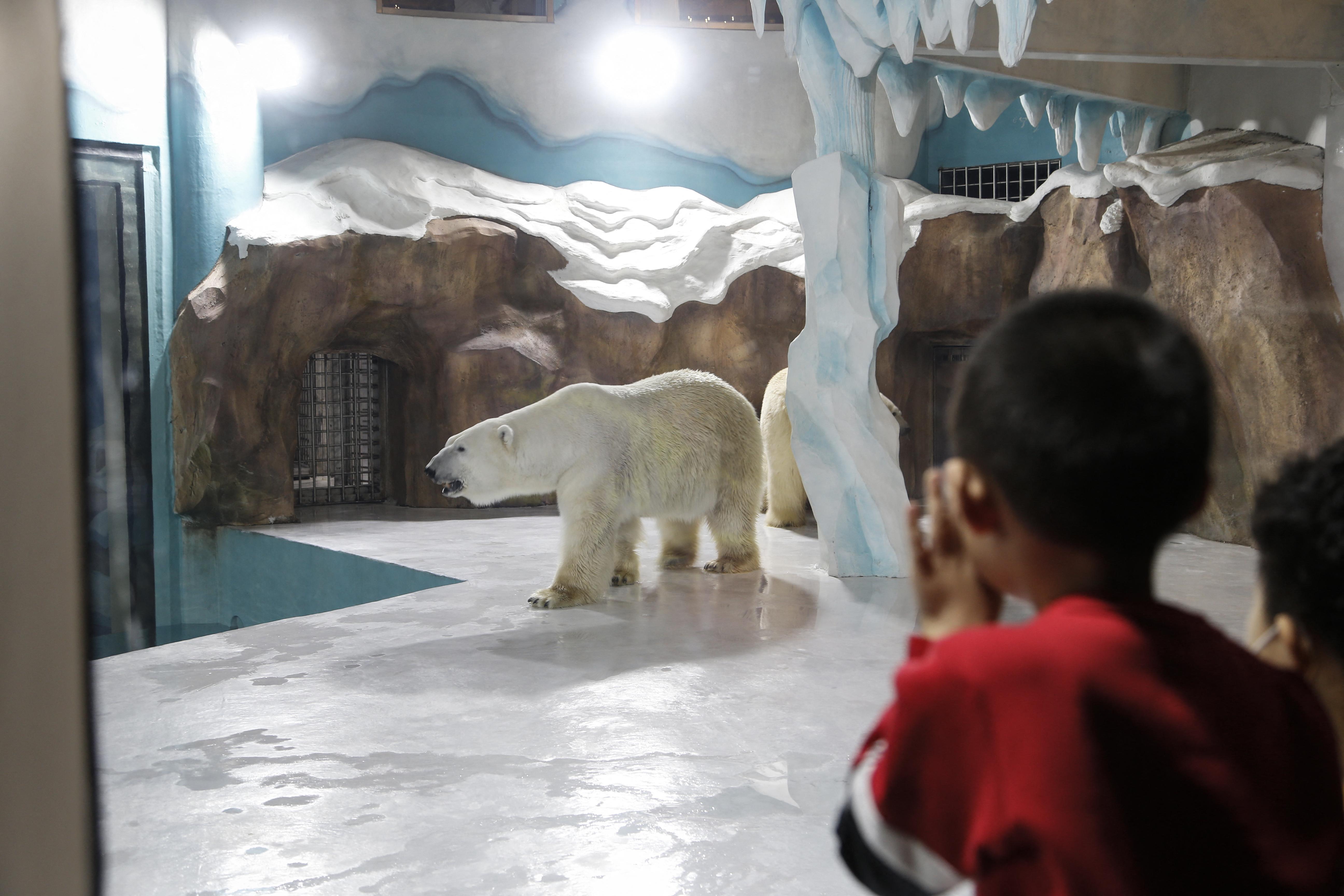 Megnyitott a kínai szálloda, amit jegesmedvék zárt kifutója köré építettek