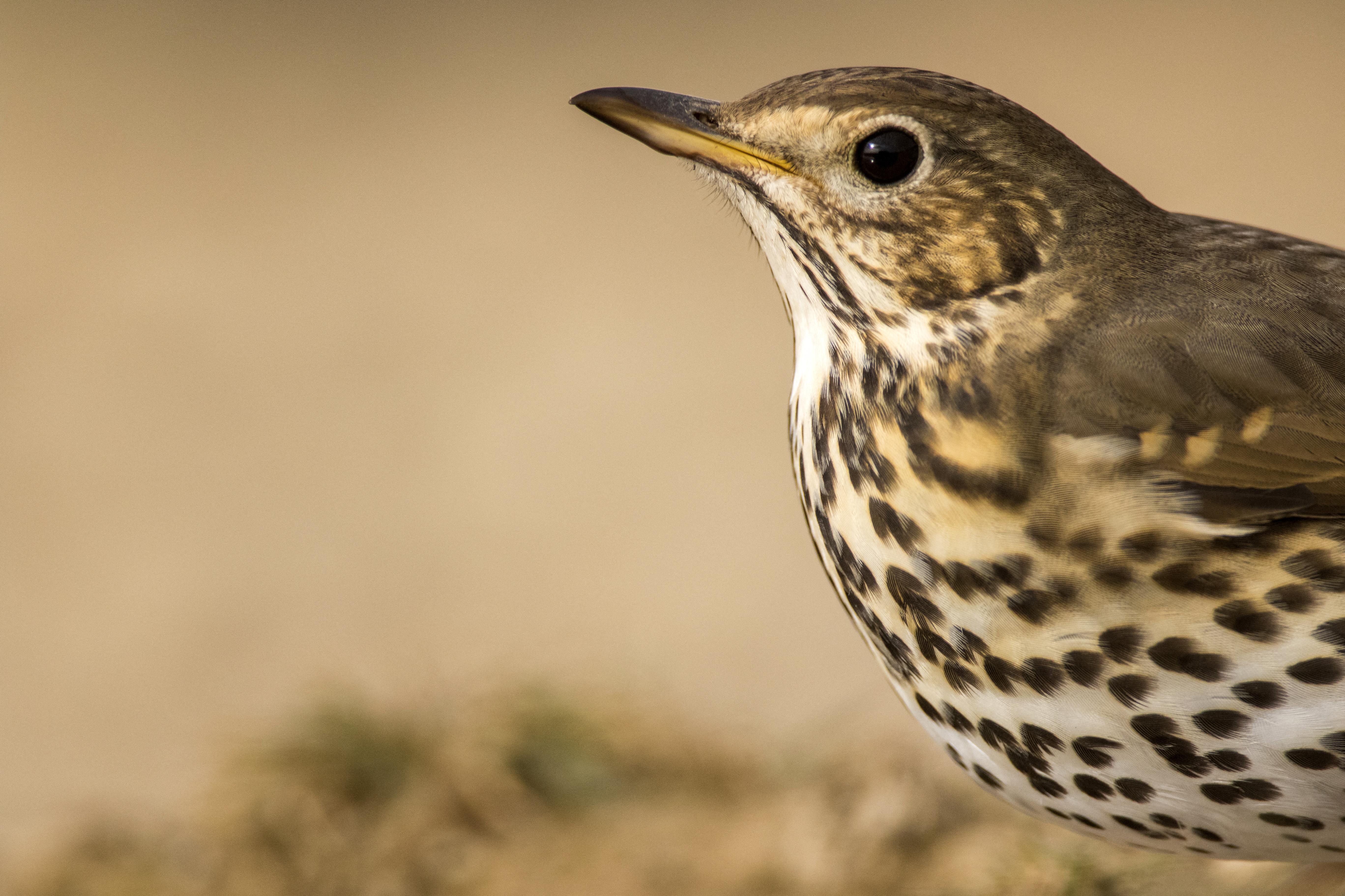 Franciaországban mostantól nem lehet élő madarakat a fákra ragasztani